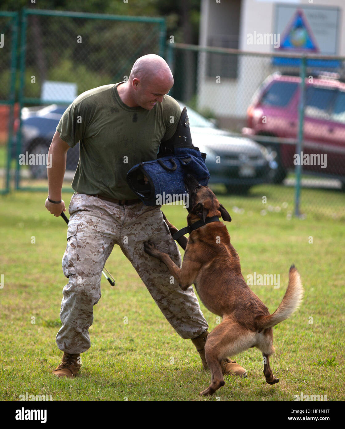 Sgt. Daniel Pierce, A Dog Handler With Marine Corps Base Hawaii's ...