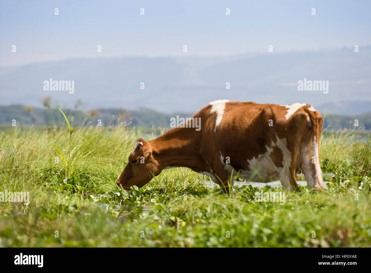 african dairy farm stock photos u0026 african dairy farm stock images