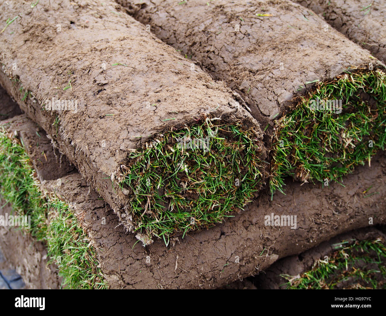 Image result for rolled up turf