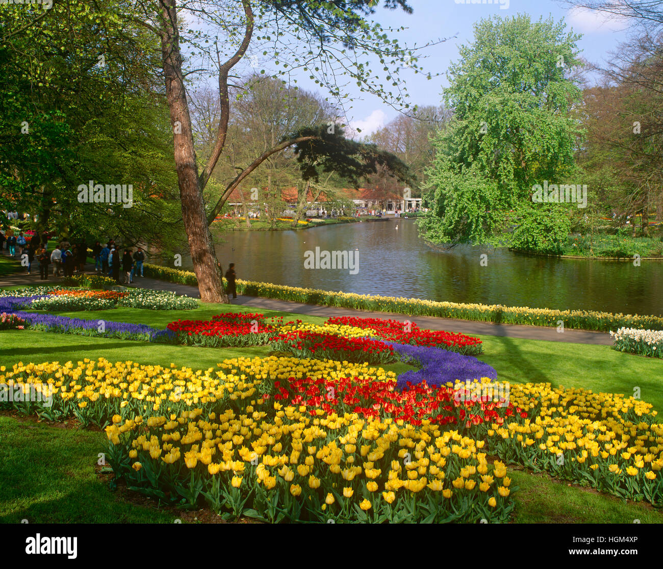 Tulip Amsterdam Keukenhof: Keukenhof Gardens, Lisse, Near Amsterdam, Holland Stock