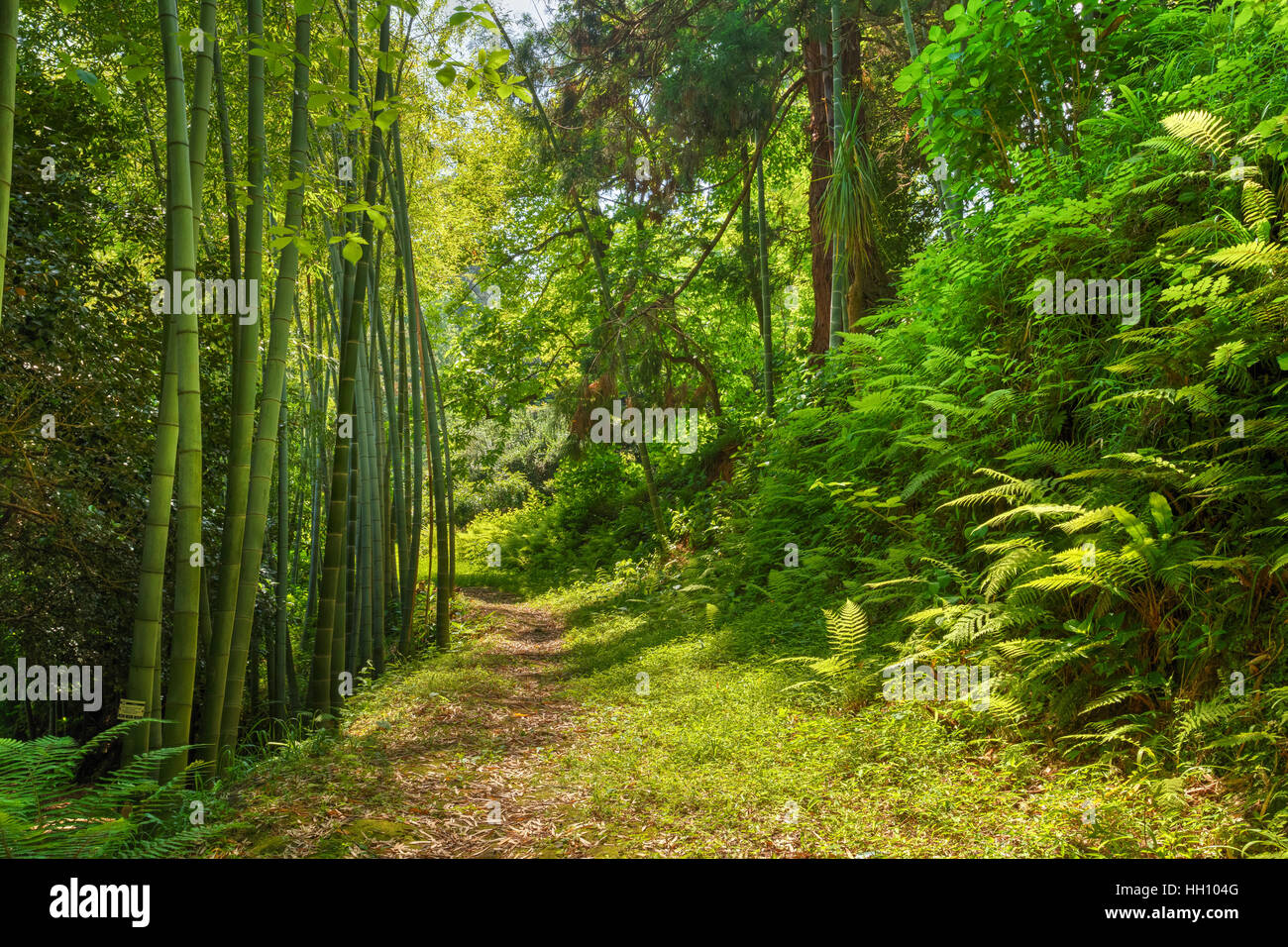 Beautiful Road Lane Path Way Through Summer Bamboo Forest