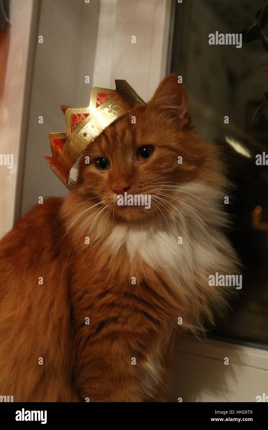 beautiful with crown on one ear ginger cat look pleasant and happy