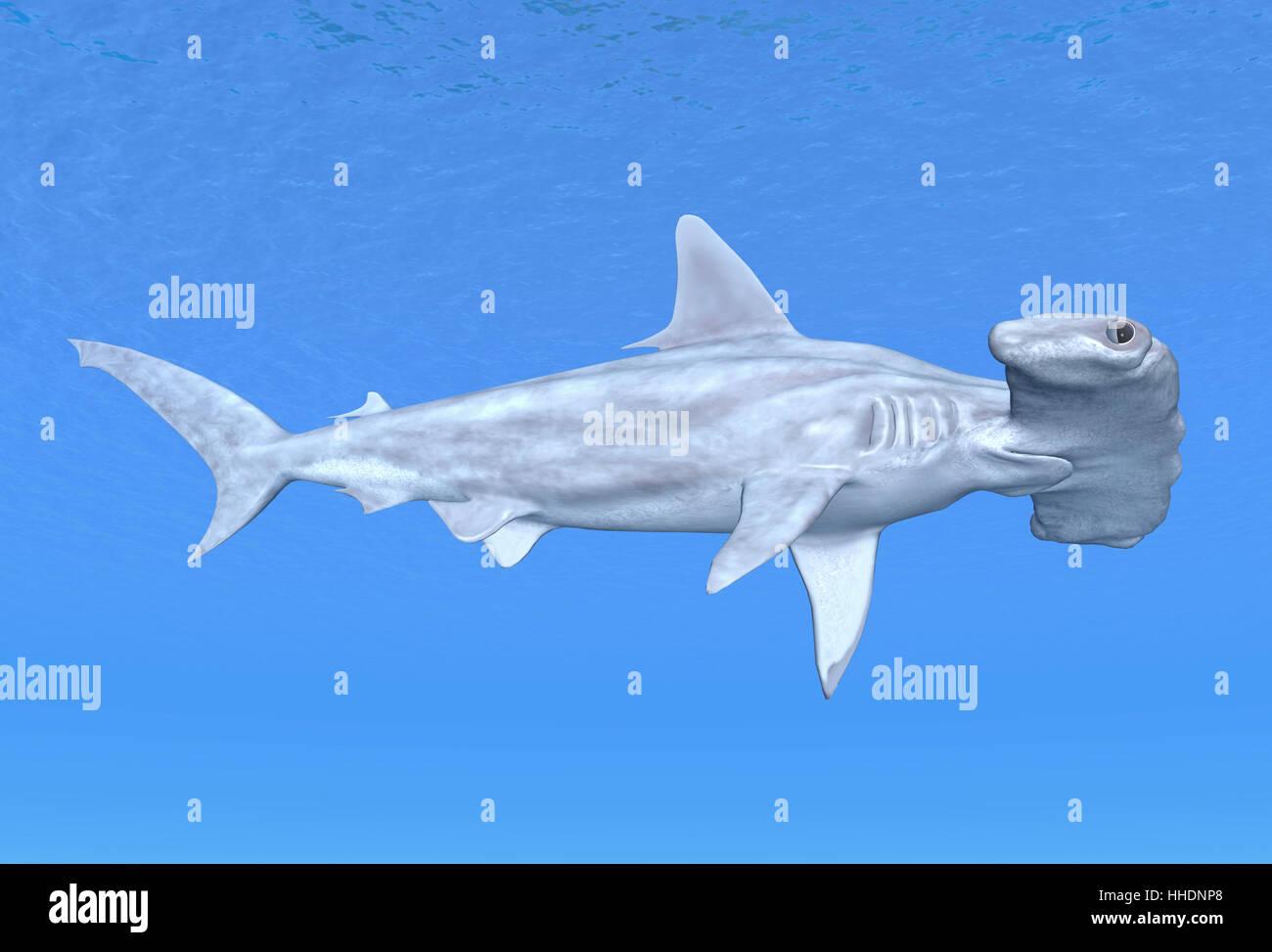 shark hammerhead sharks blue animals fish underwater
