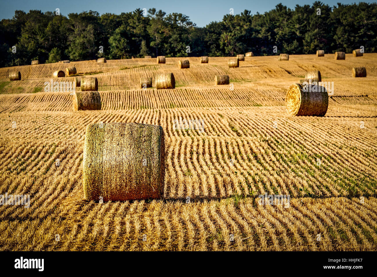 Hay In The Farm Fields Of Manitowoc County Wisconsin Stock Photo ...