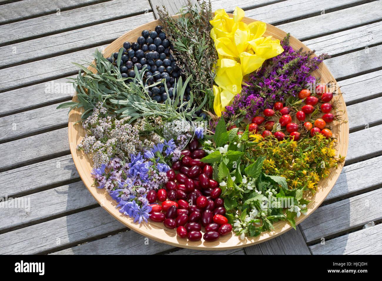 Spätsommer  Spätsommer Blütenteller und Früchteteller. Blüten, Blumen, Kräuter ...