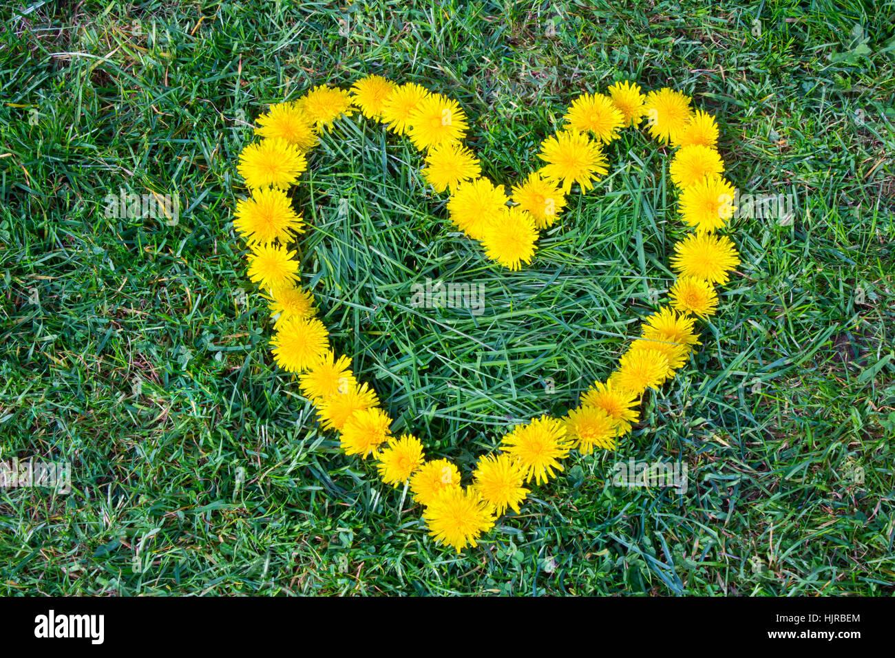 Heart flower made of dandelion yellow flowered weed flowers on heart flower made of dandelion yellow flowered weed flowers on the grass love france mightylinksfo