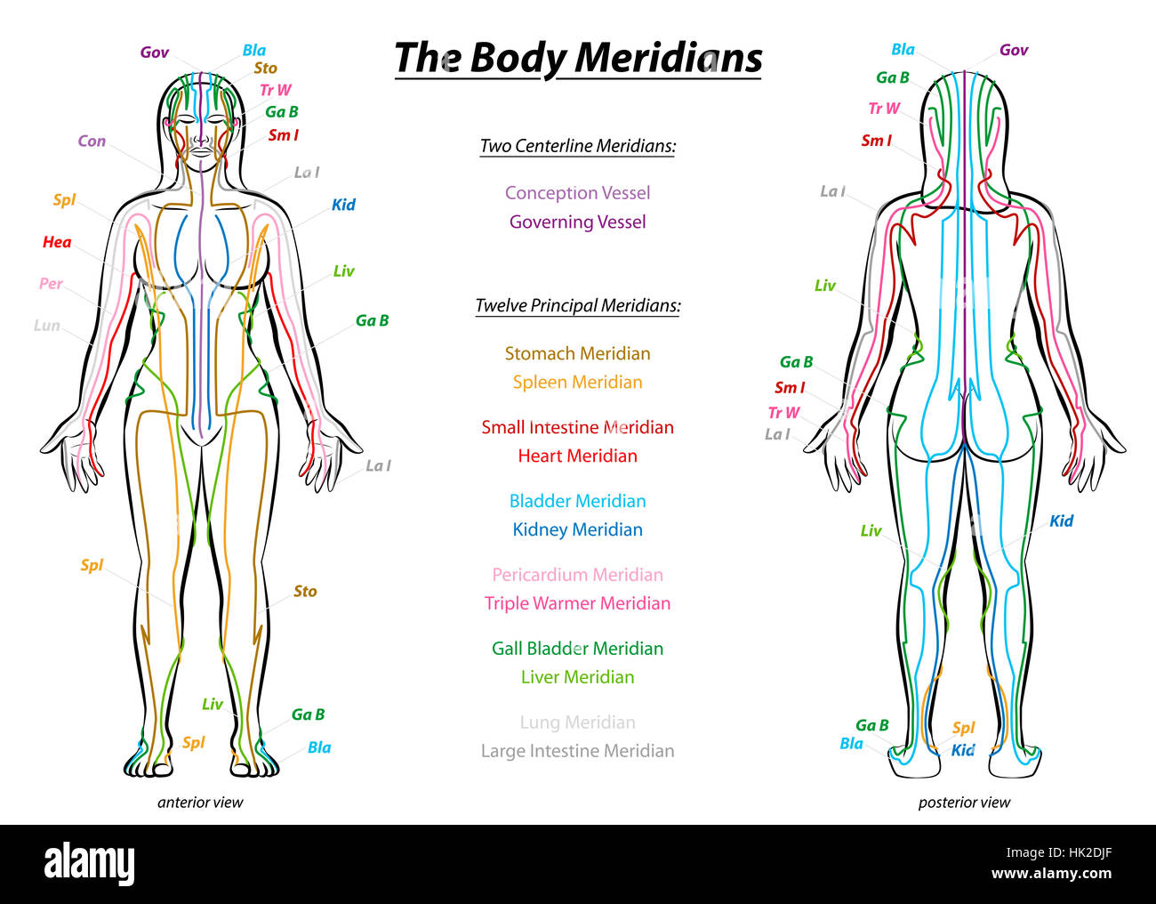 acupuncture meridian charts: Meridian system chart female body with principal and centerline