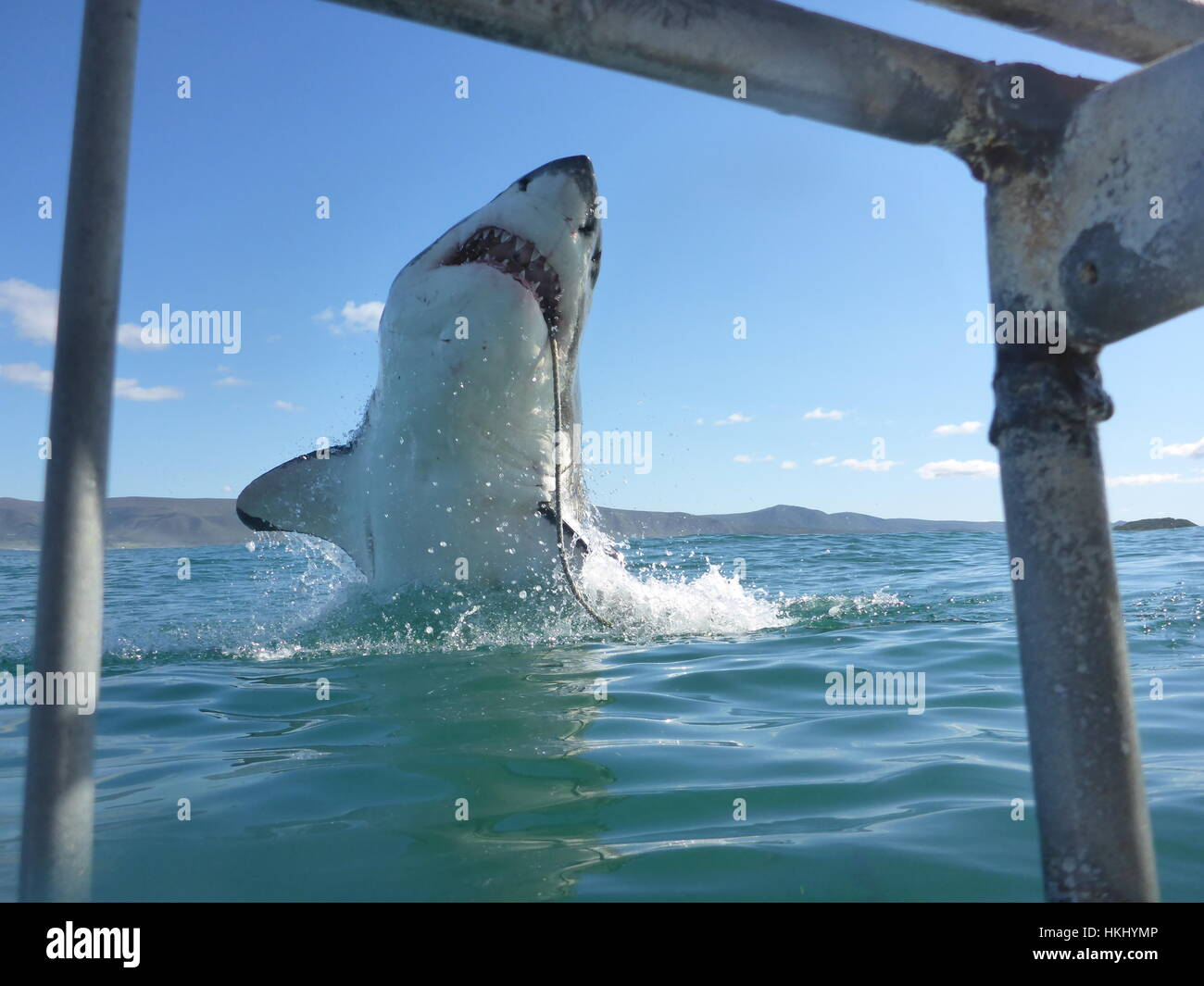 Sharks Jumping Out Of Water With Mouth Open | www.imgkid ...