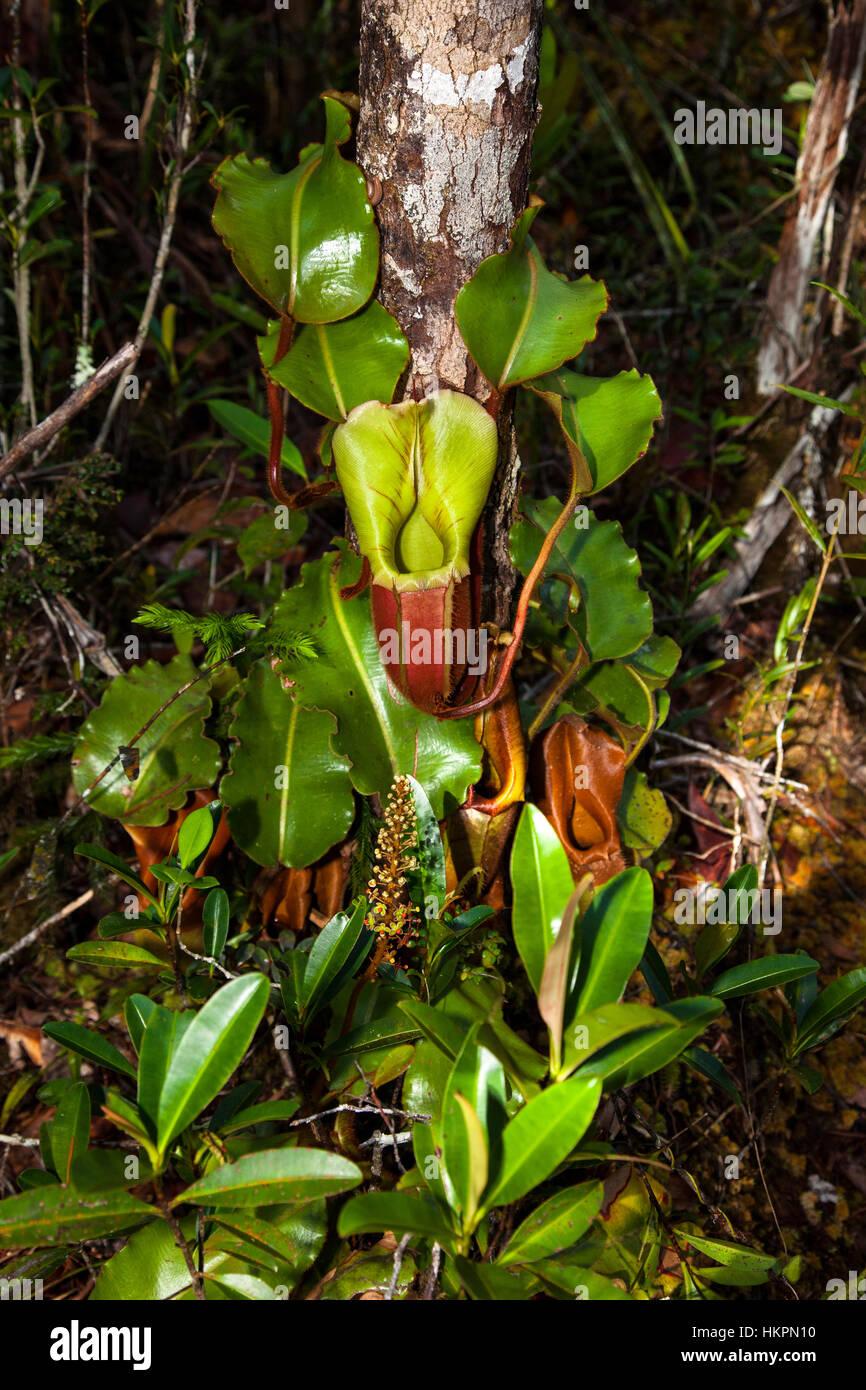 climber plant rainforest stock photos u0026 climber plant rainforest