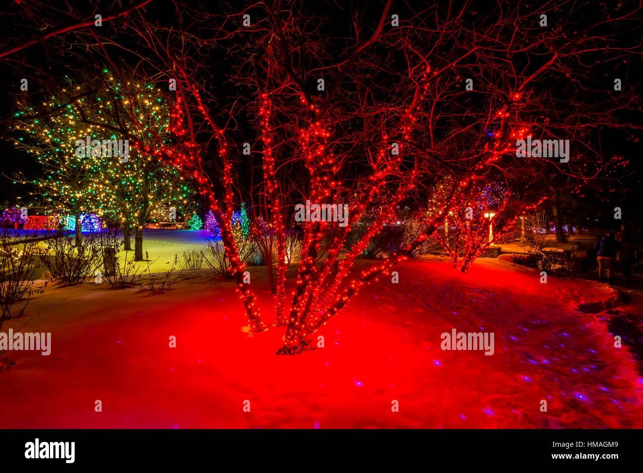 Nice A Hudson Christmas (holiday Light Show At Hudson Gardens), Littleton,  Colorado USA