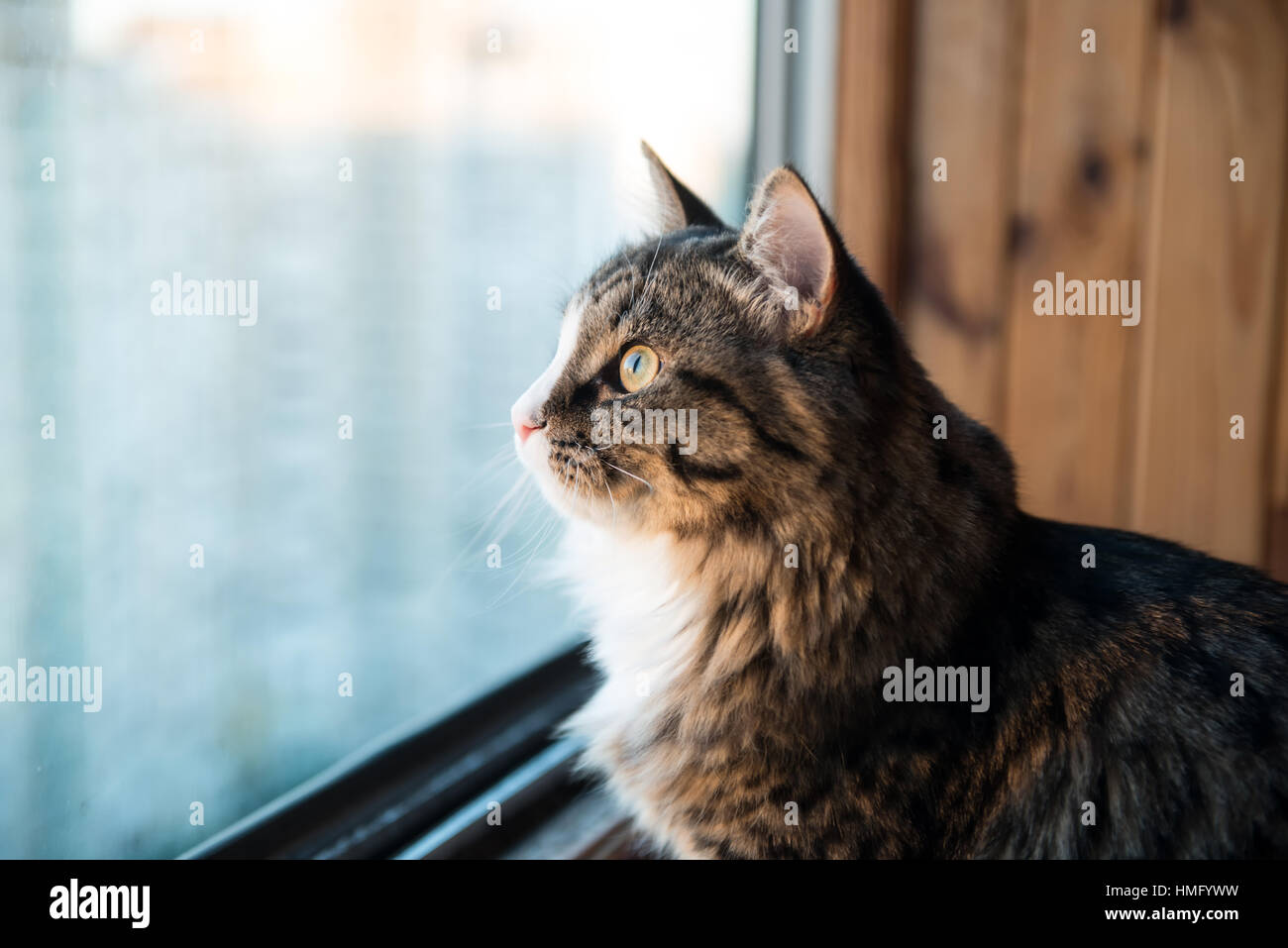 Attractive Cat Looks Out The Window. Beautiful Cat Sitting On A Windowsill And Looking  To The Window