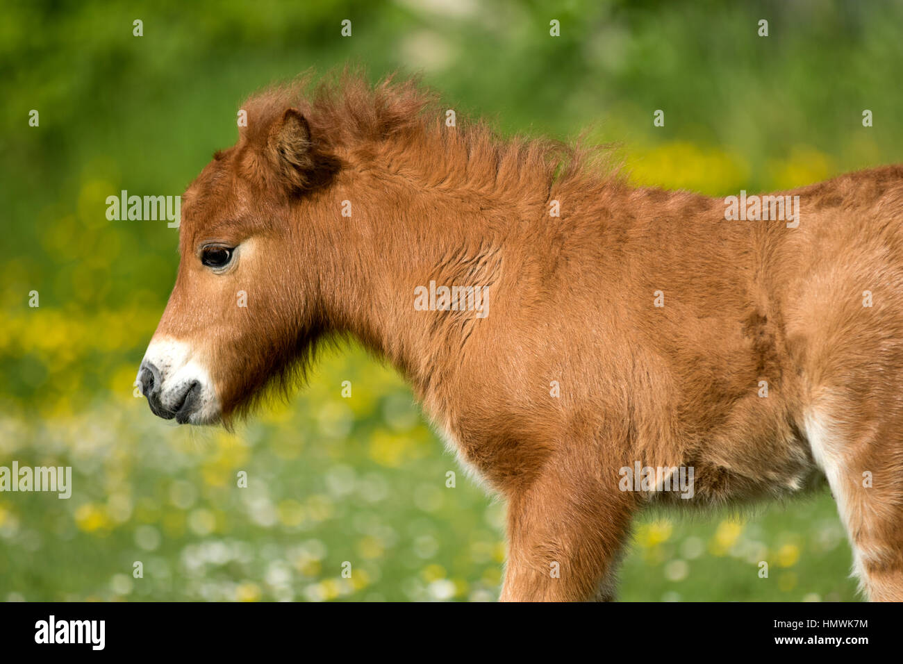 Cute Mare And Foal