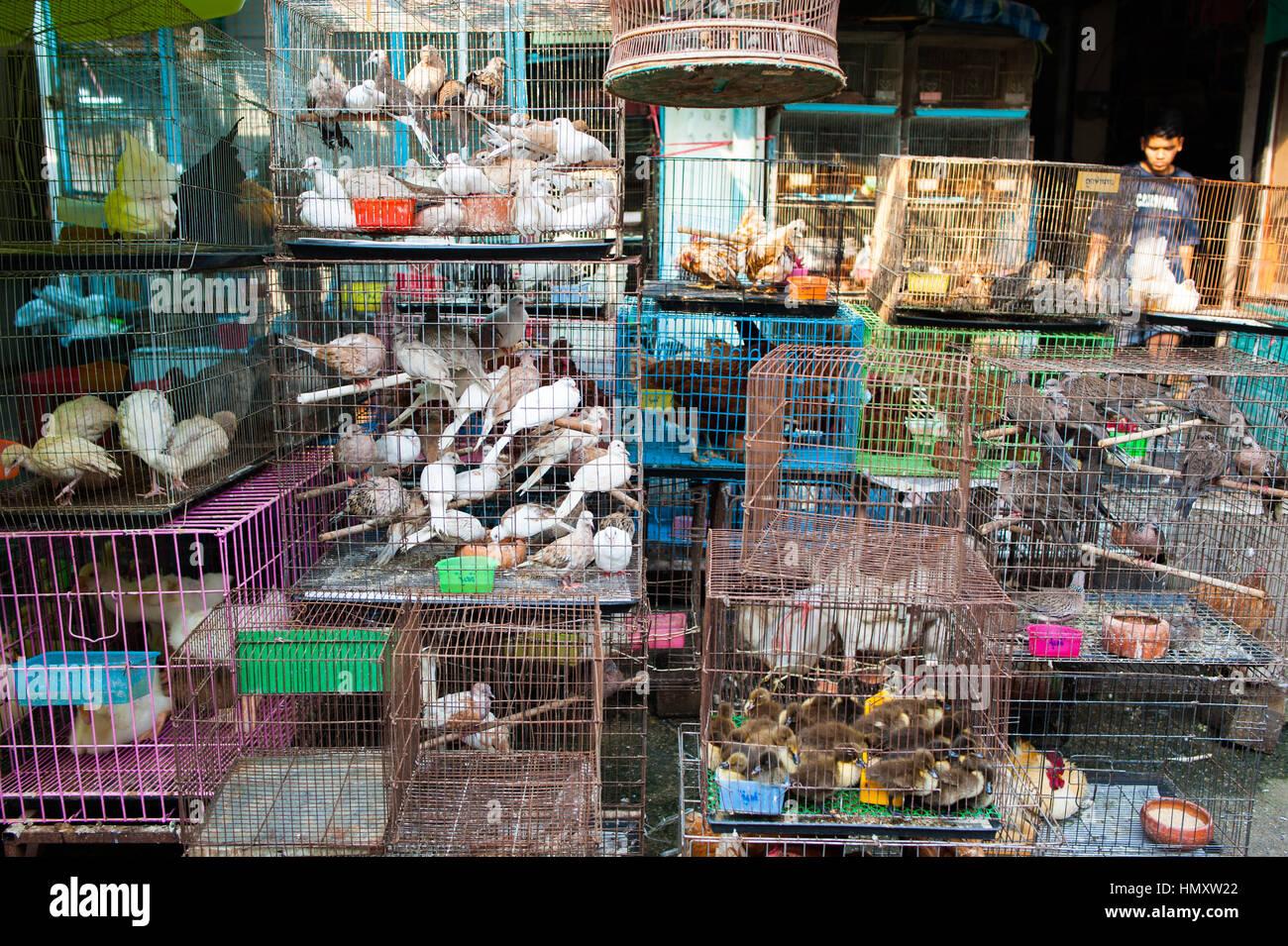Animals In Chatuchak Market Bangkok Stock Photo Royalty