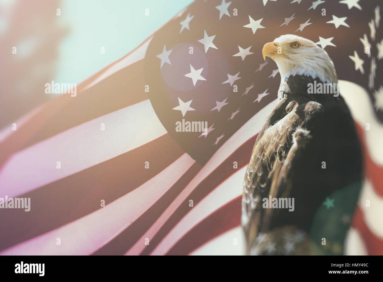 Bald eagle symbol of american freedom perched in front of an stock bald eagle symbol of american freedom perched in front of an american flag united states of america patriotic symbols buycottarizona Choice Image