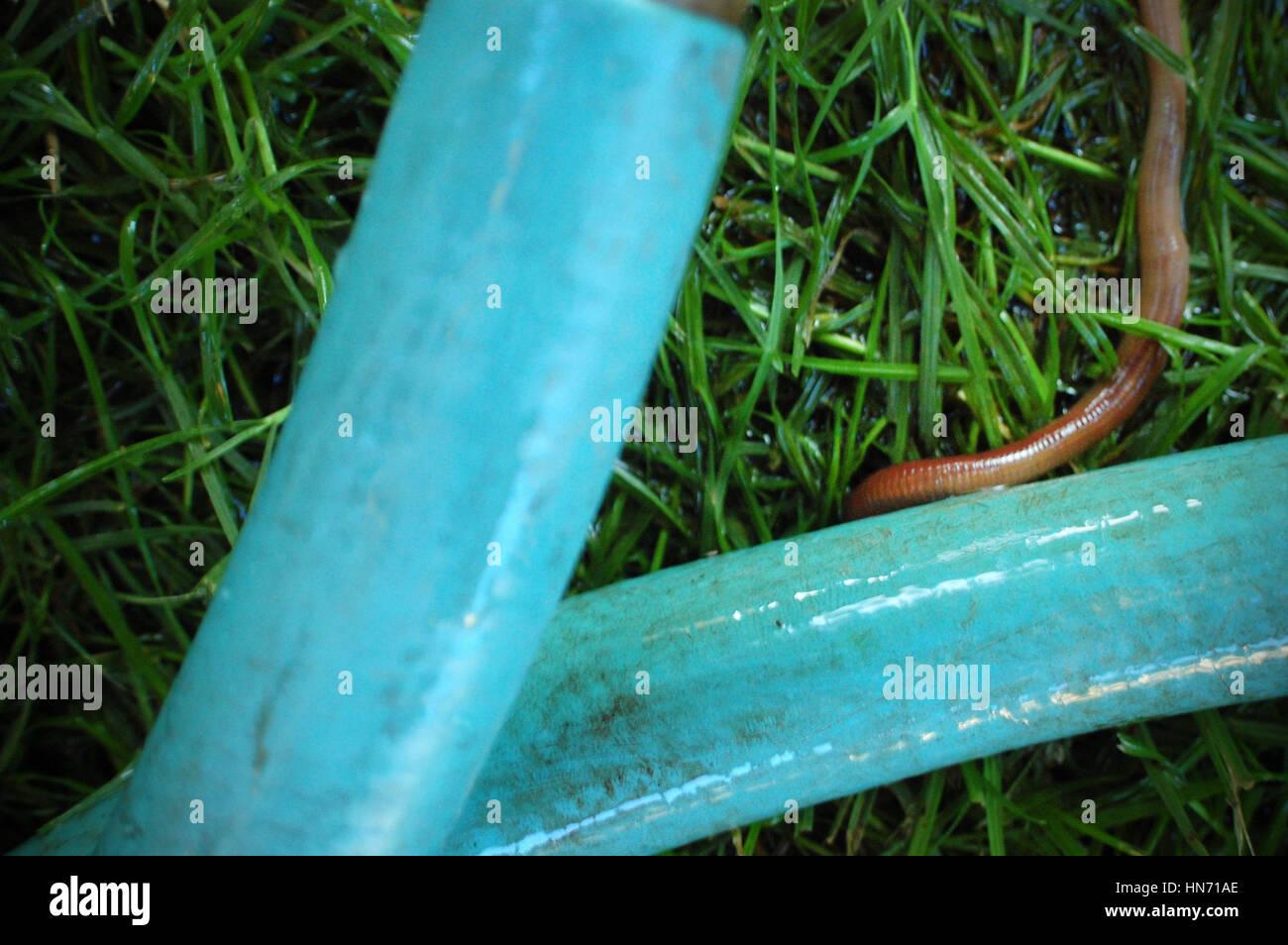 soak hose garden stock photos u0026 soak hose garden stock images alamy