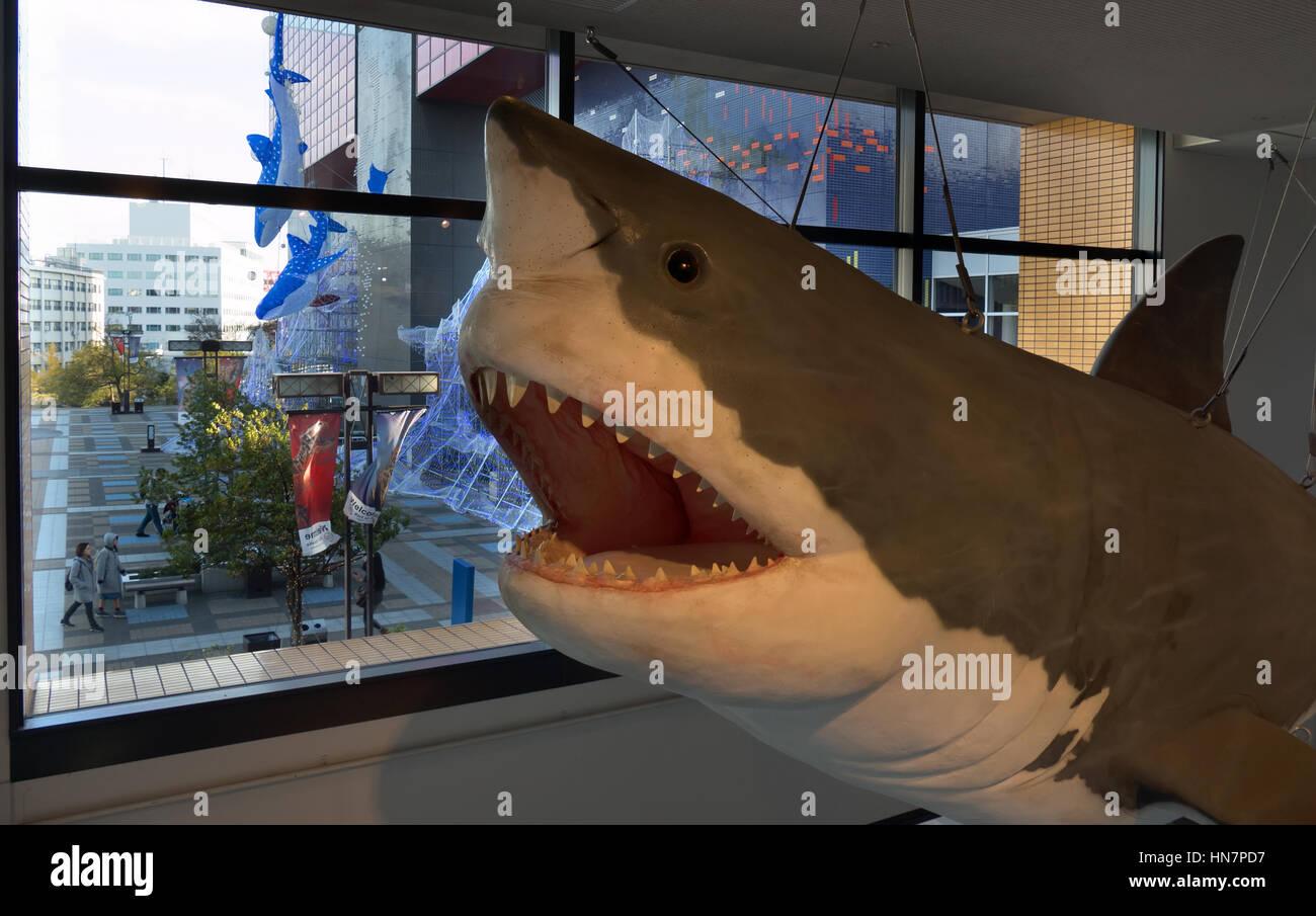 Fish aquarium japan - Whale Shark Sharks Fish Sea Animals At Osaka Aquarium Japan Asia