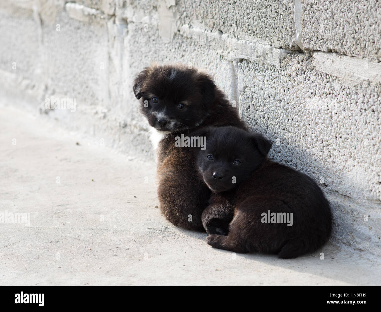 Very cute black puppies Beautiful puppies little puppies Stock