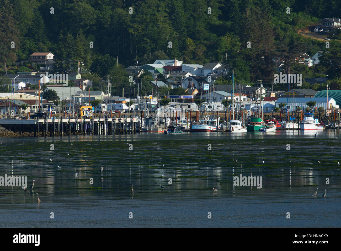 Garibaldi across tillamook bay garibaldi oregon stock for Tillamook bay fishing