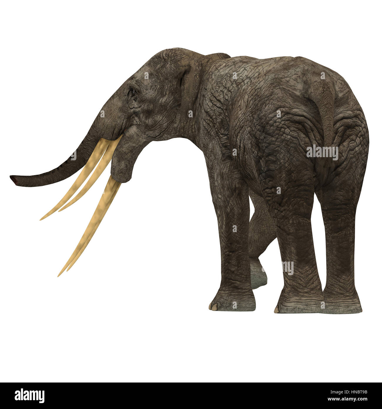 stegotetrabelodon was an elephant that lived in the miocene and