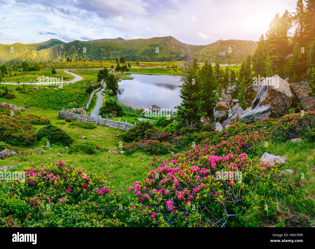 Glade With Flowers Near The Water In Mountains Stock Photo