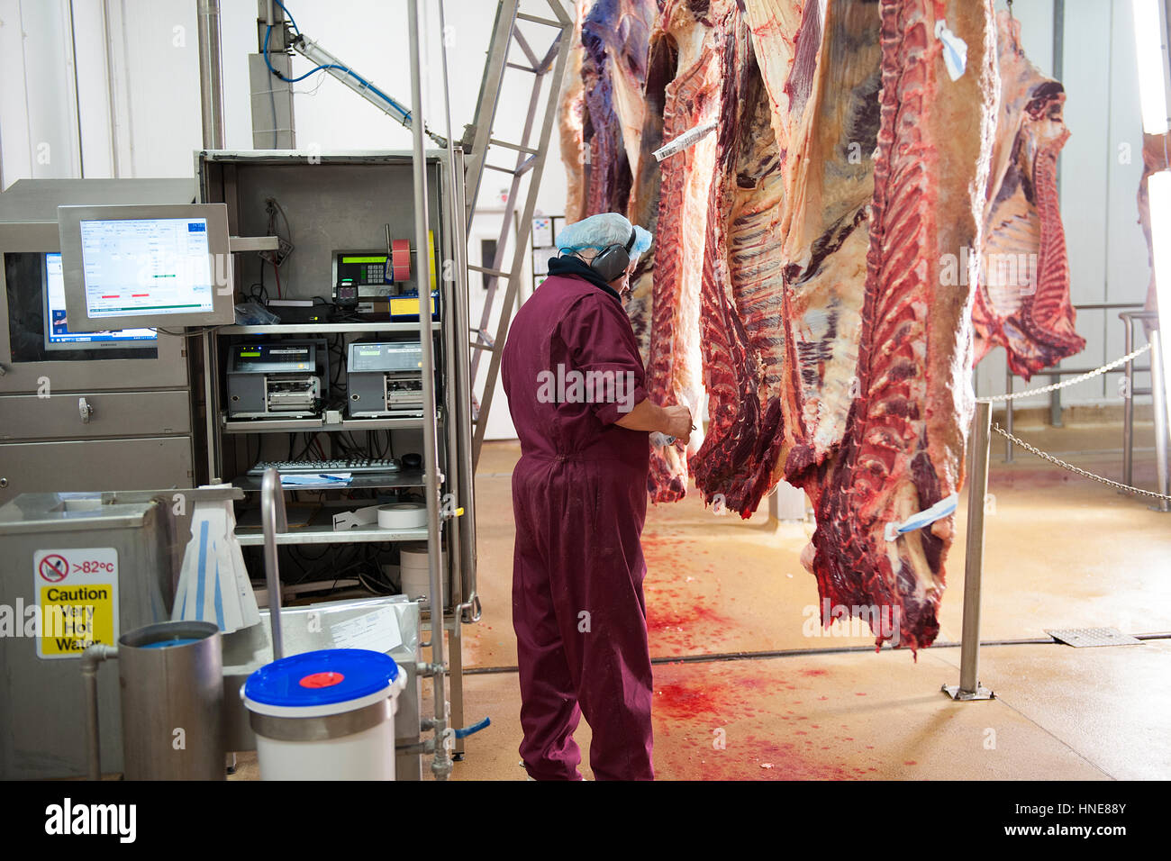 Beef Carcasses Hanging In The Kill Floor Before Butchery And Processing In  The Meat Processing And Packing Plant
