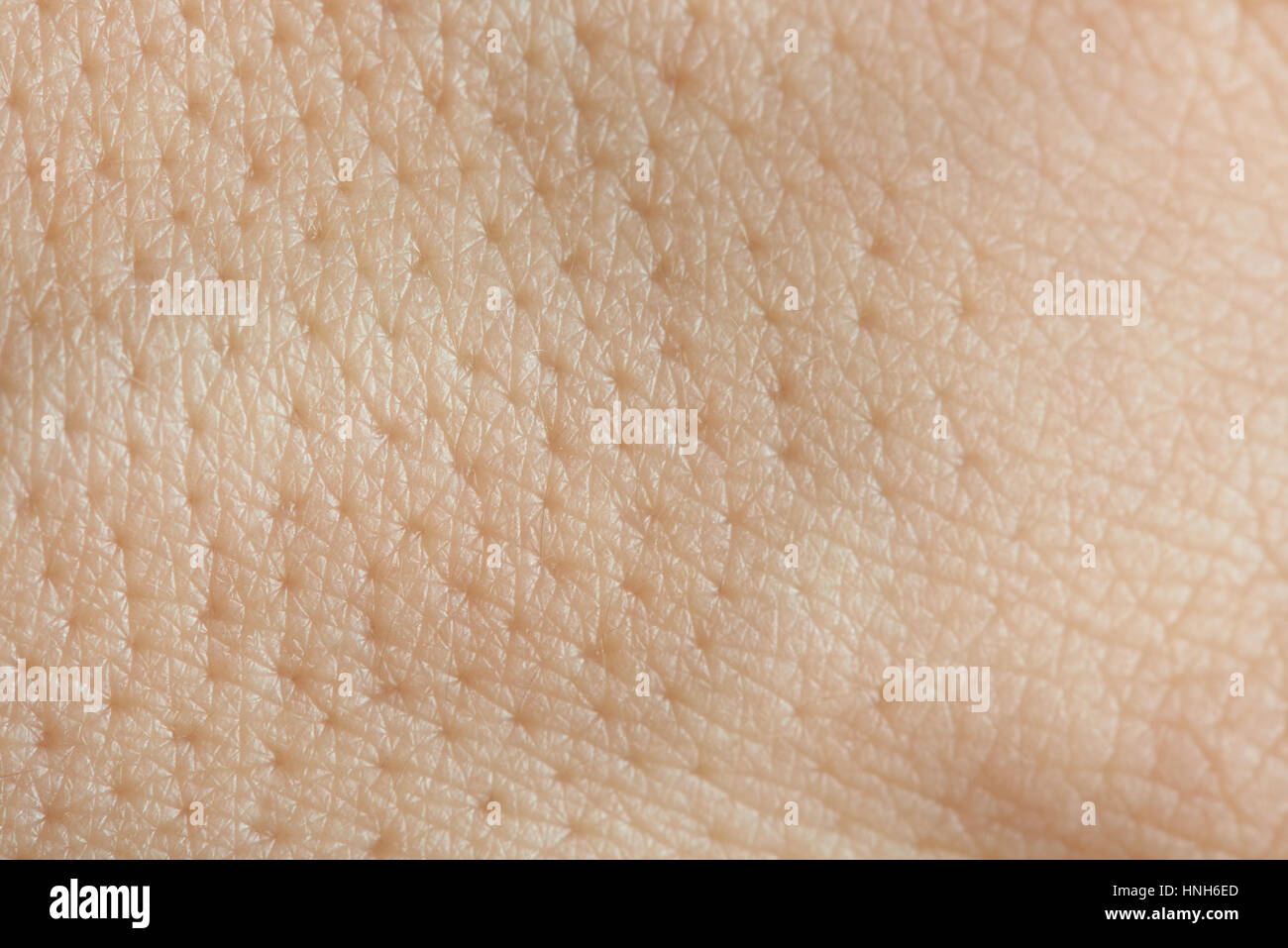 pores on human skin macro up of caucasian skin with holls stock photo royalty free image pores on human skin macro up of caucasian skin with holls stock photo royalty free image