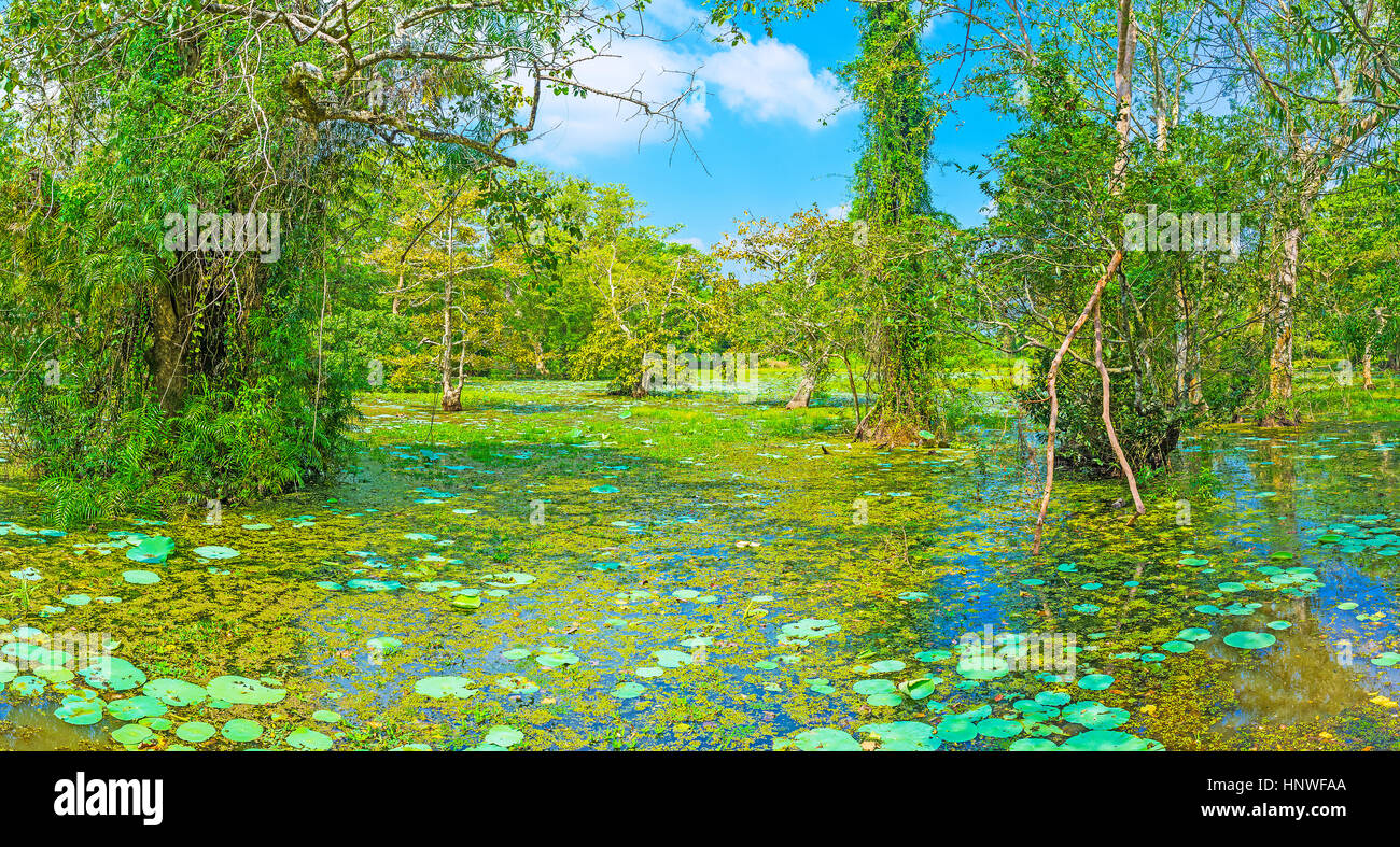 The freshwater swamp in forest of Nisala Sewana Park, picturesque ...