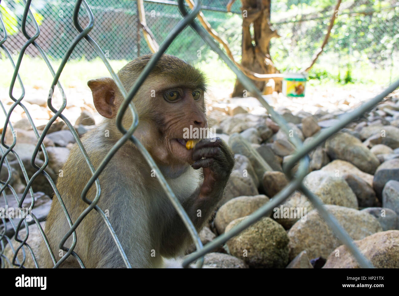 Monkey in the zoo