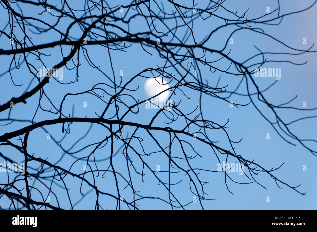 moon-shining-through-bare-tangled-branch
