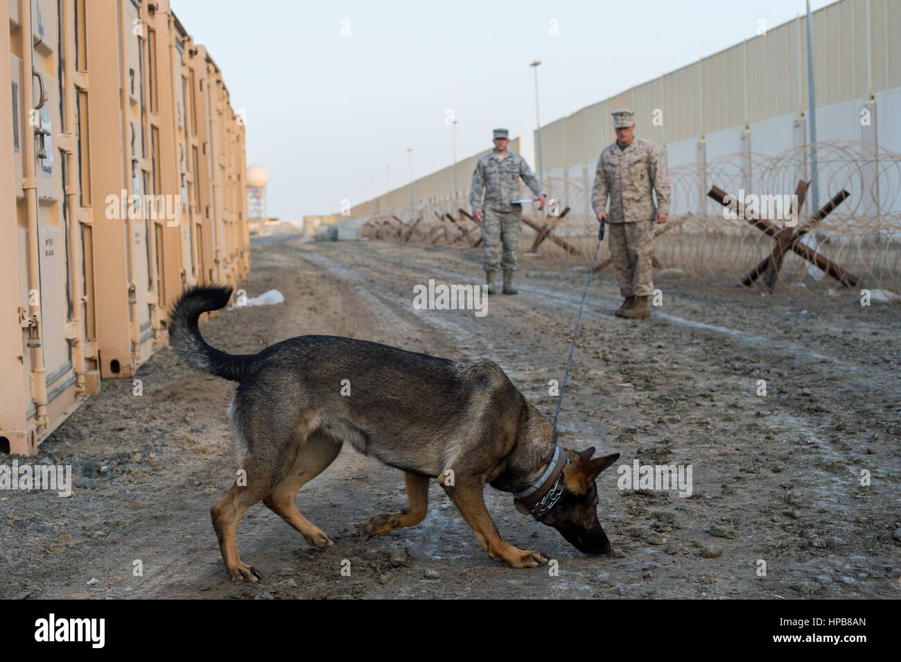 U.S. Marine Corps dog handlers drills his military working dog ...