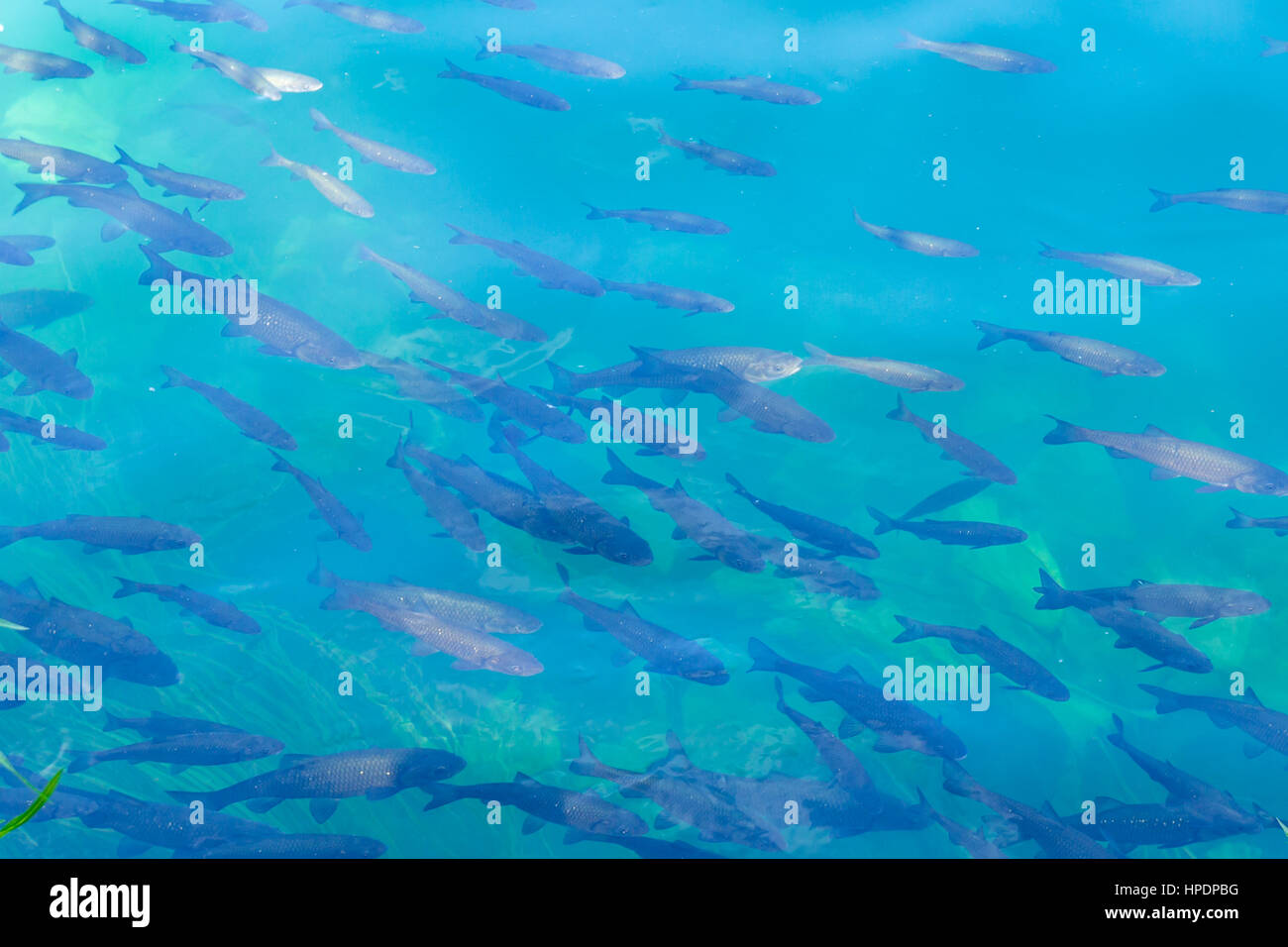 of fish in bright blue river abstract background texture