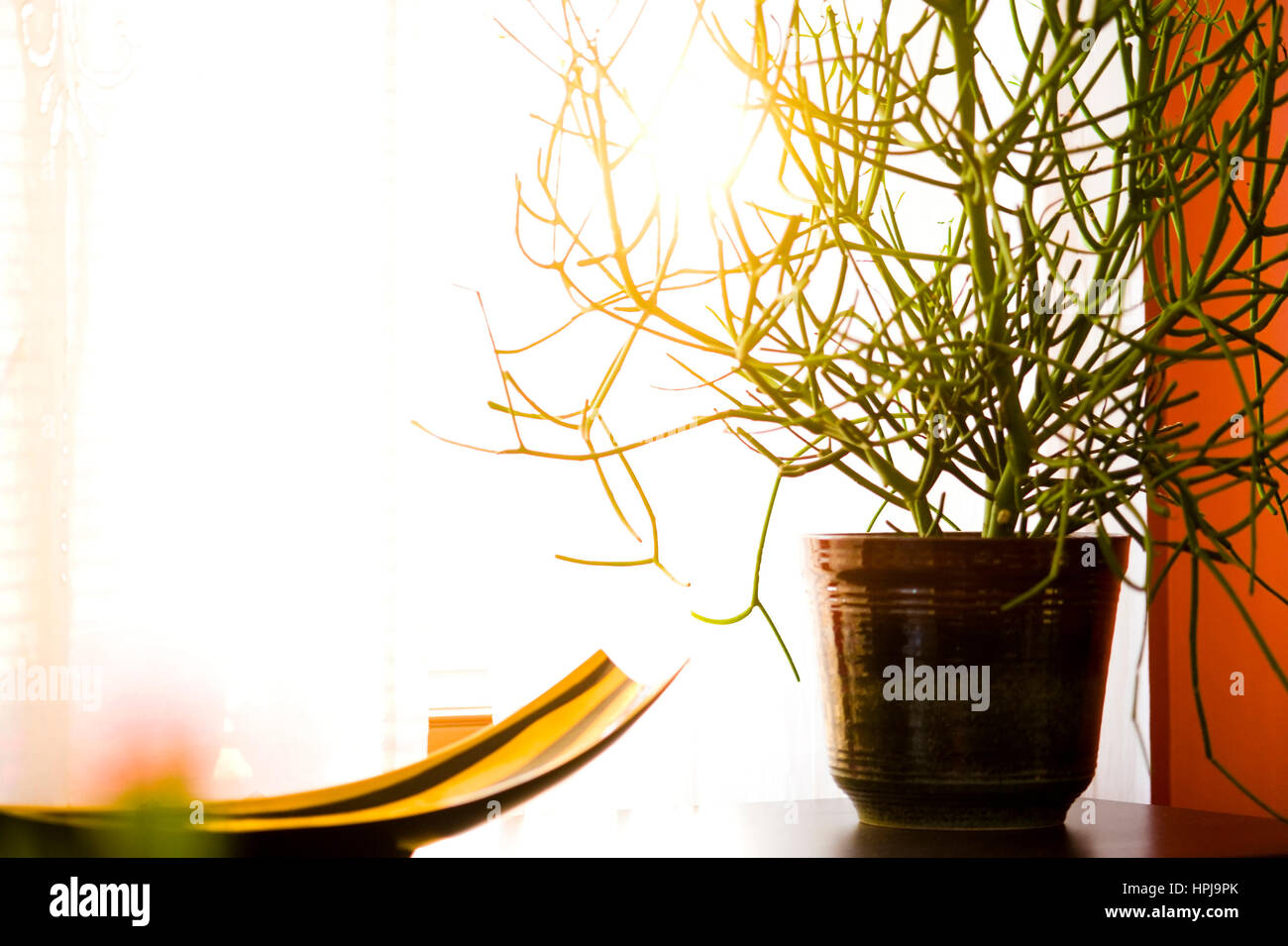 Wohnraumgestaltung, Zimmerpflanze - interior Stock Photo: 134397835 ...