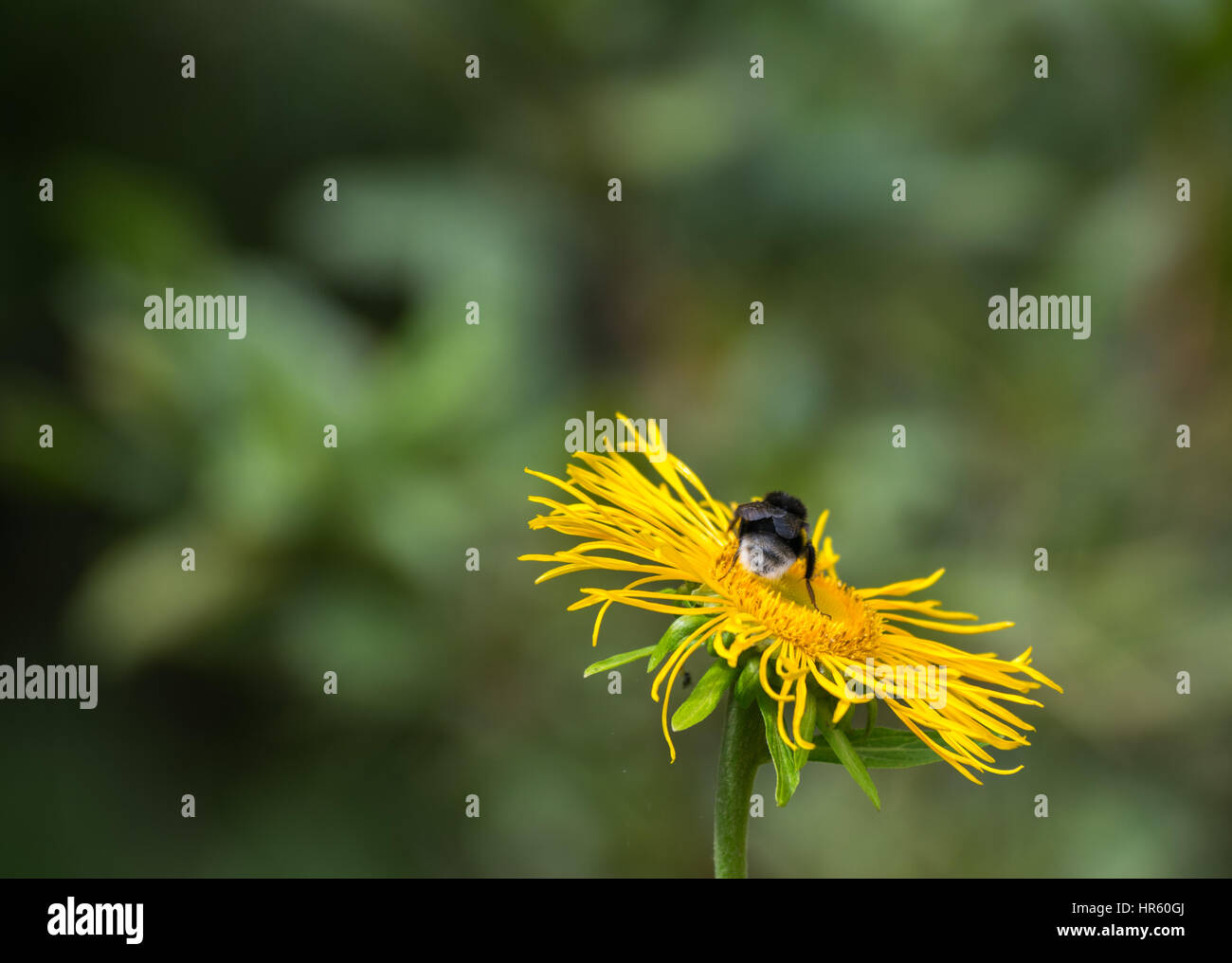 Wonderful nature in spring flowers blooming in pruhonice park stock photo wonderful nature in spring flowers blooming in pruhonice park czech republic europe dhlflorist Choice Image