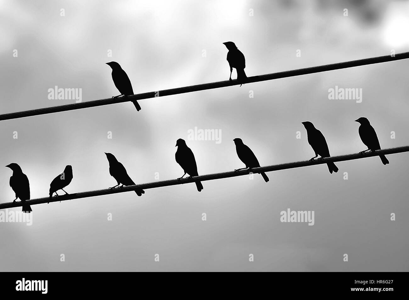 Black birds on a power line over a cloudy sky background Stock Photo ...