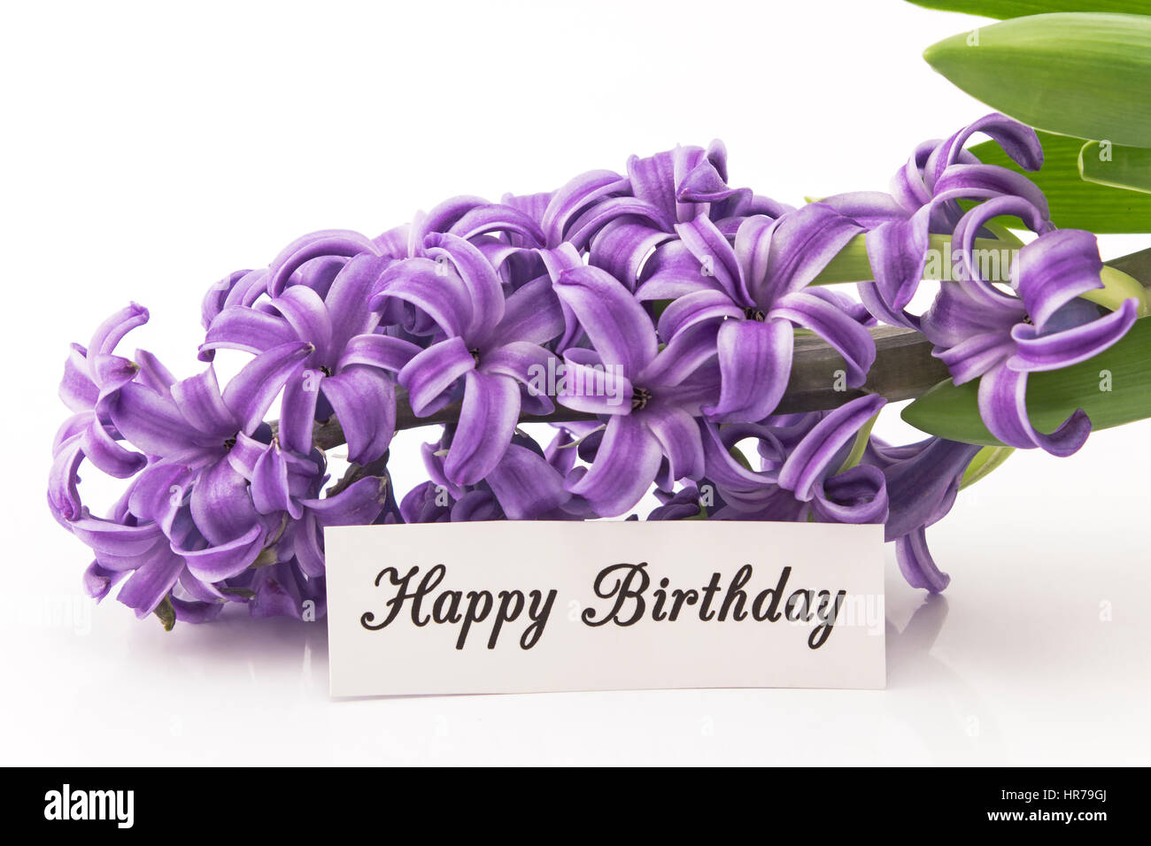 Happy birthday card with hyacinth on white background stock photo happy birthday card with hyacinth on white background dhlflorist Gallery