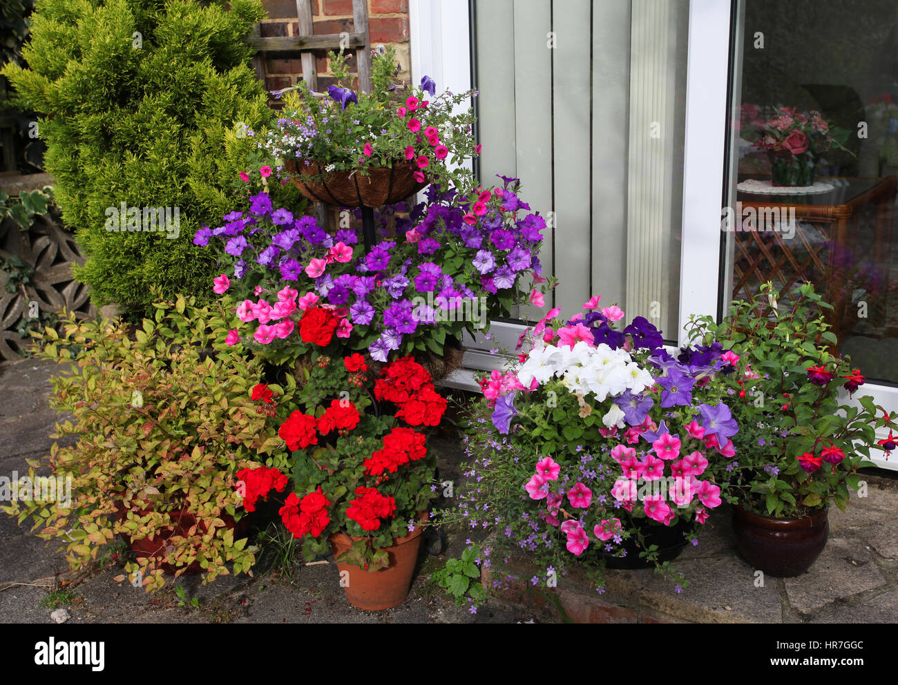 colourful selection of summer bedding plants outside patio doors - Outside Patio Doors