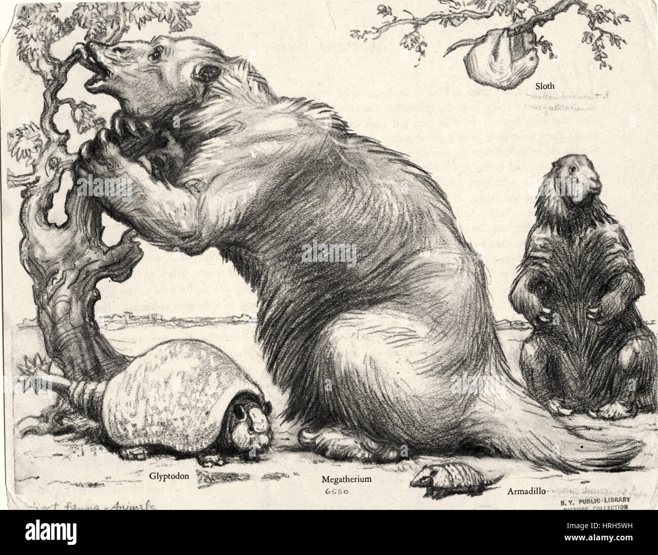 glyptodon and megatherium extinct fauna stock image