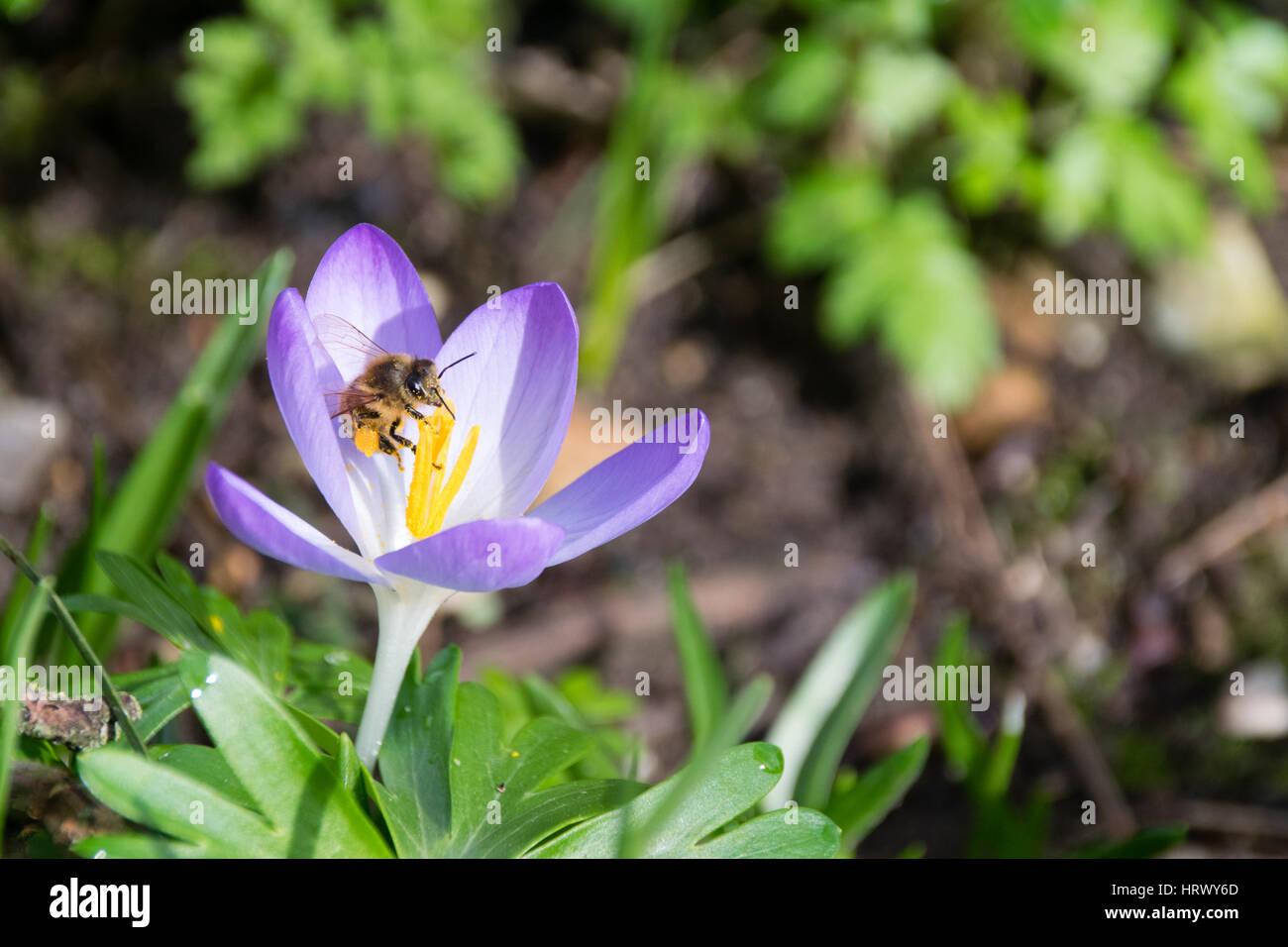 Spring Flowers For Bees Gallery Fresh Lotus Flowers