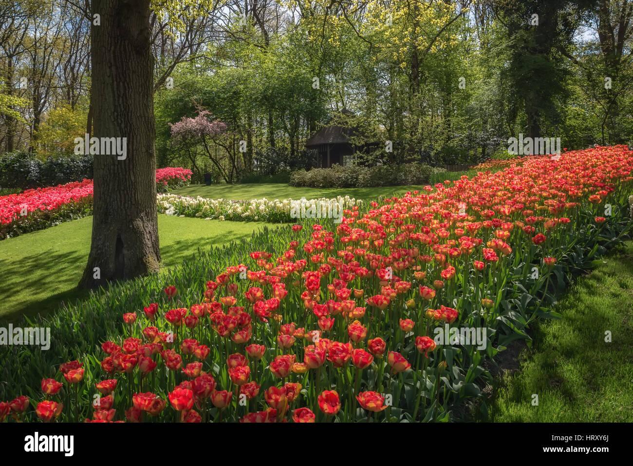 The Keukenhof is de most beautiful flower park in the ...
