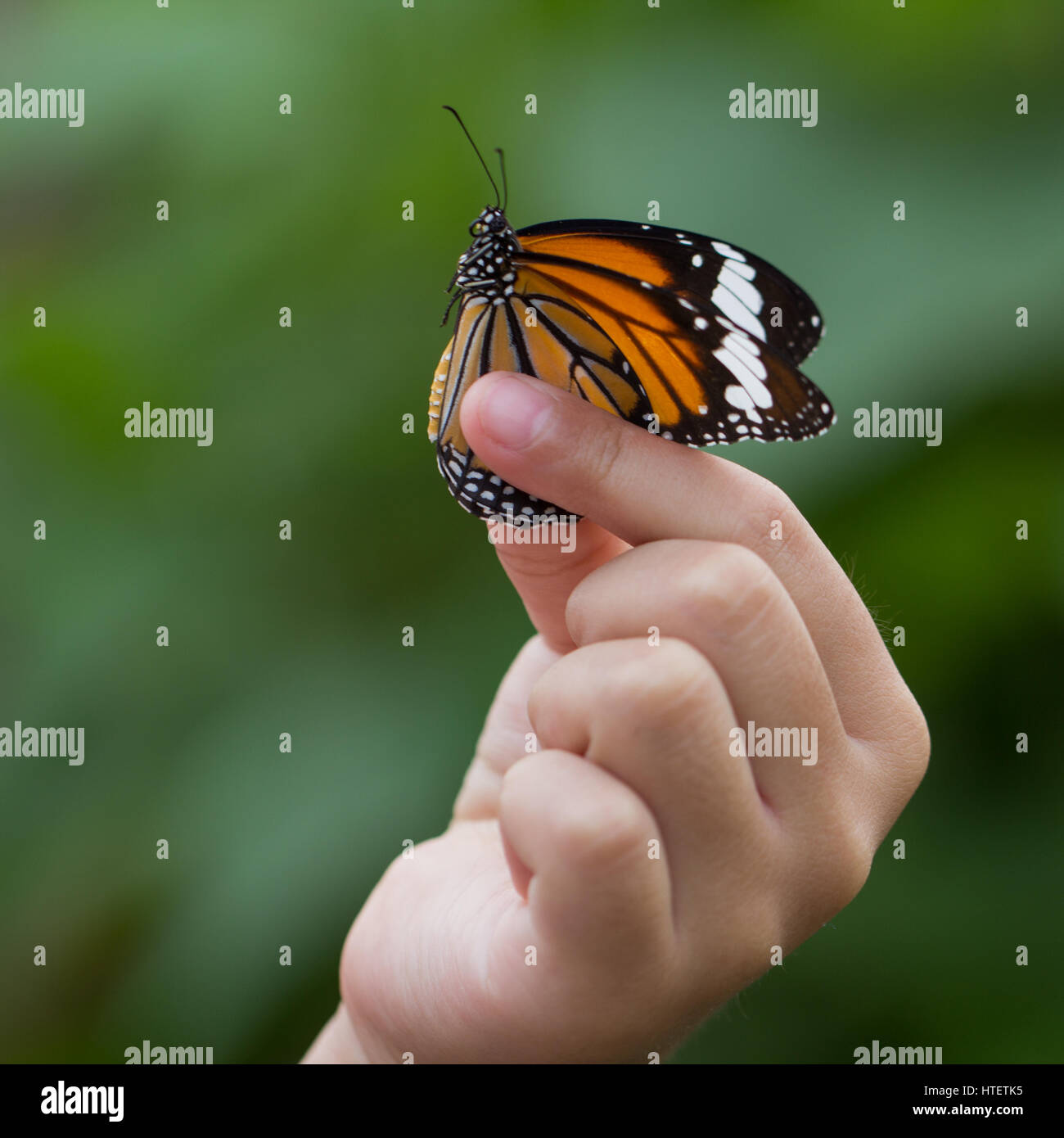 Uncategorized Butterfly Hand beautiful butterfly sitting on the girl hand stock photo royalty hand