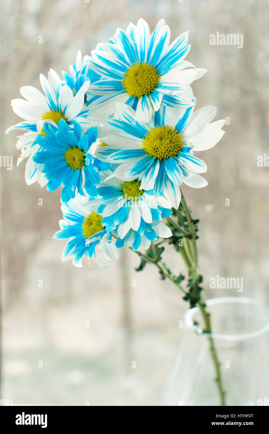 Blue and white aster flowers in a glass vase on a windowsill stock blue and white aster flowers in a glass vase on a windowsill dhlflorist Image collections
