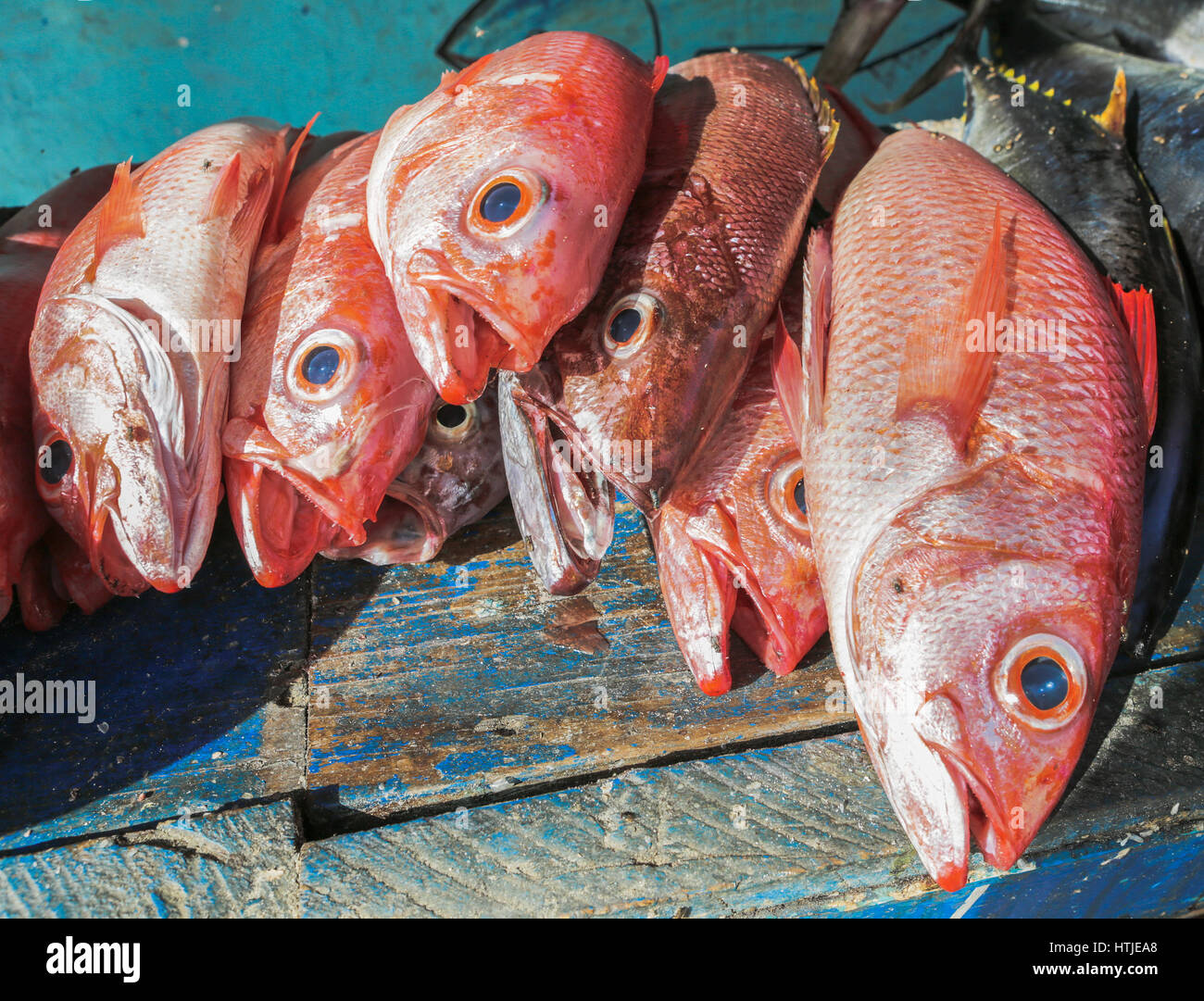 Red fish for sale on street stock photo royalty free for Stock fish for sale
