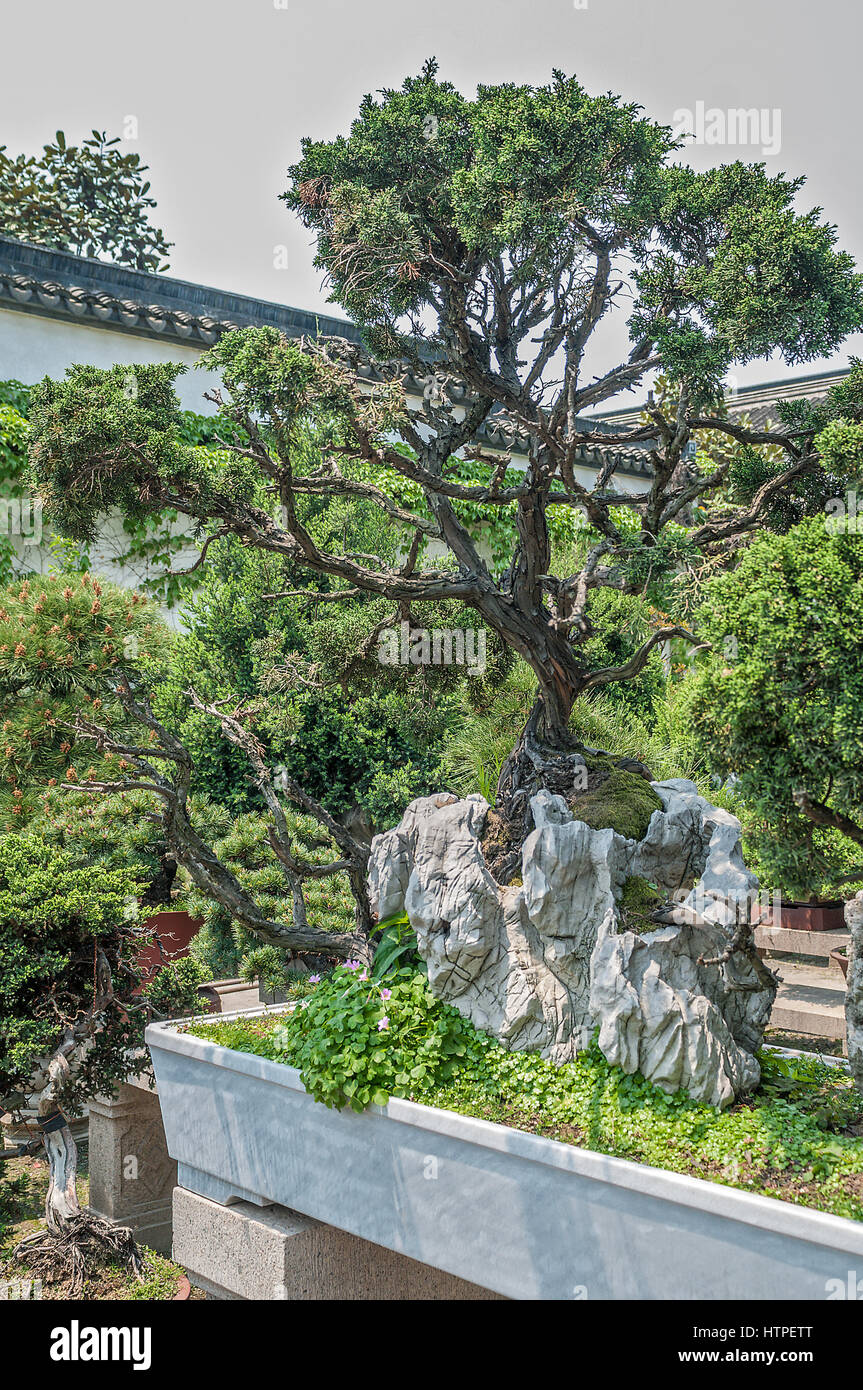 Nice China, The Amazing Beauty Of The Art Of Bonsai. Planted In Separate Pots Of  Dwarf Trees, Which Give Fancy Shapes, Dazzling The Audience