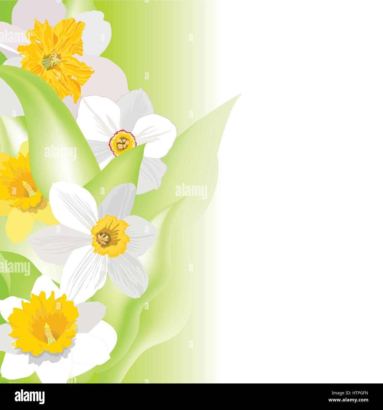 Garden Border Background Flower Flourish D