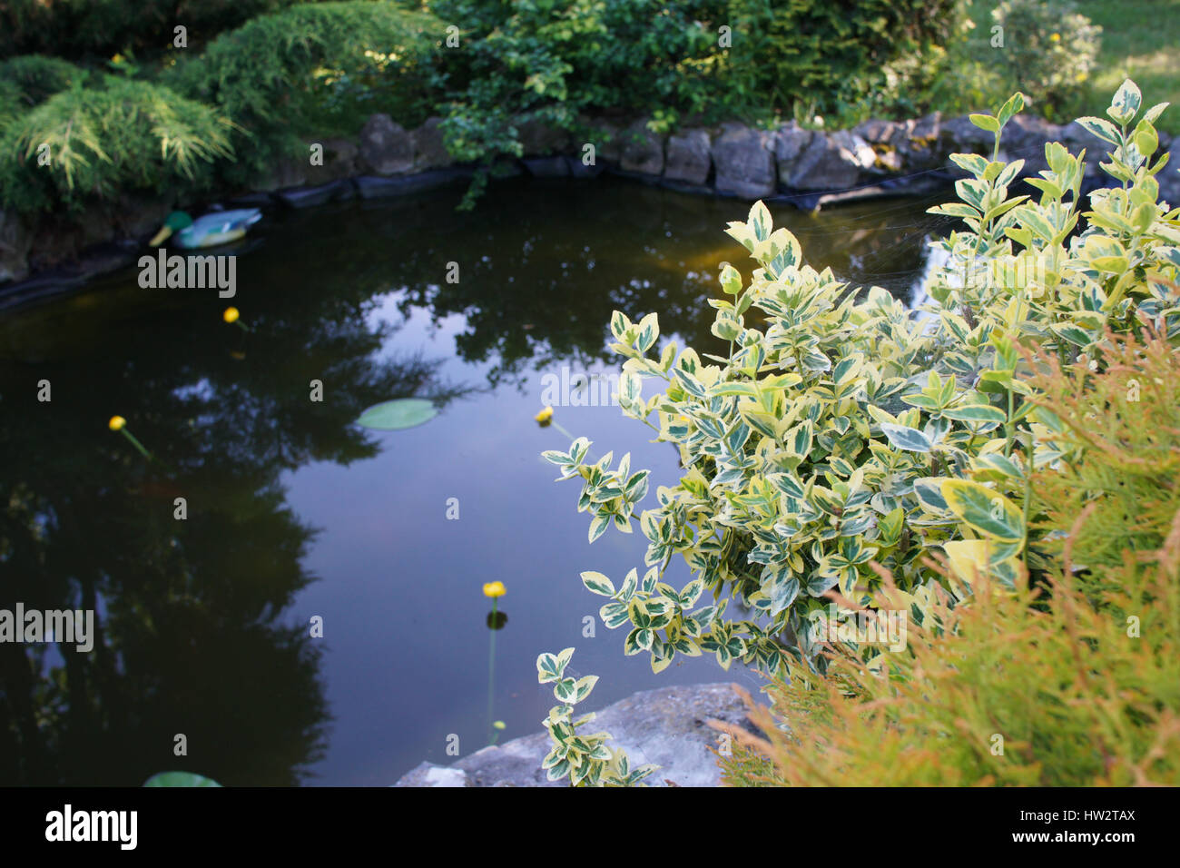 Beautiful garden pond surrounded by trees shrubs and for Plants found in japanese gardens