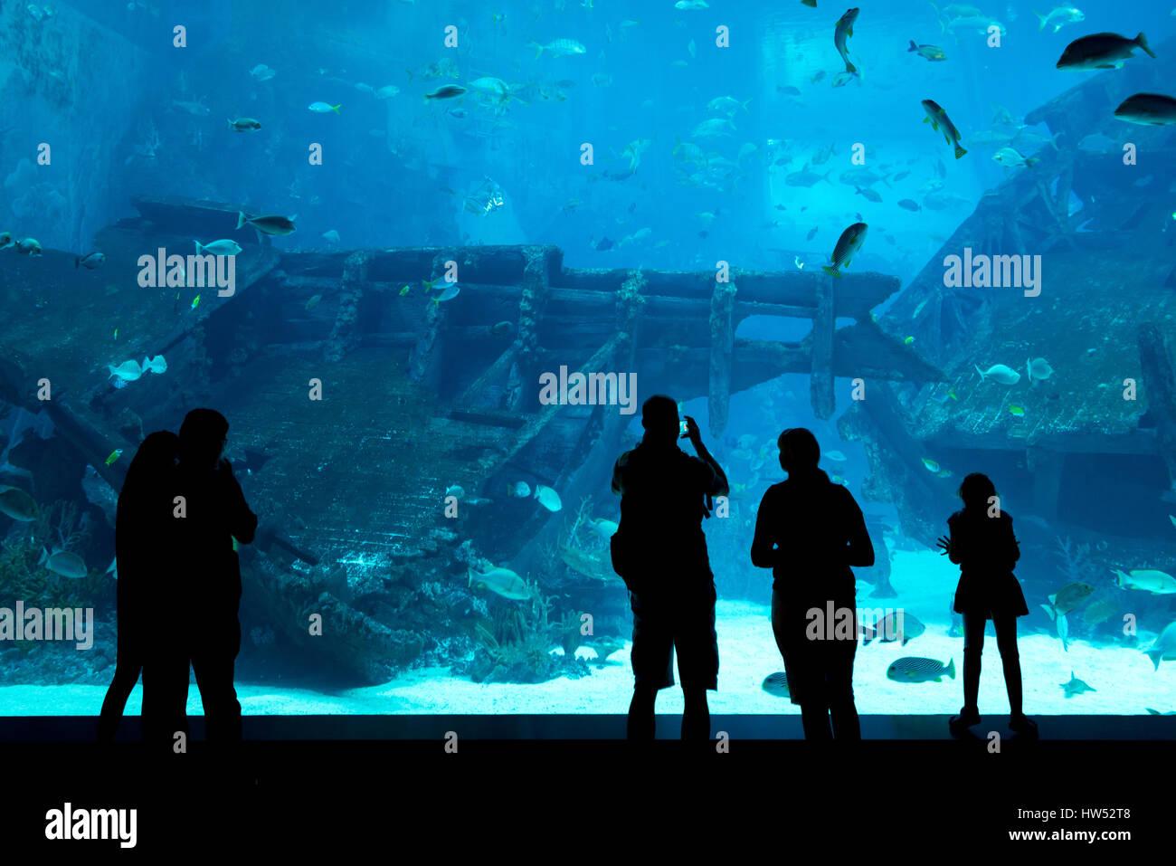 Fish in big aquarium - Silhouettes Of People Against A Big Aquarium Tourist Looking Fish In Aquarium