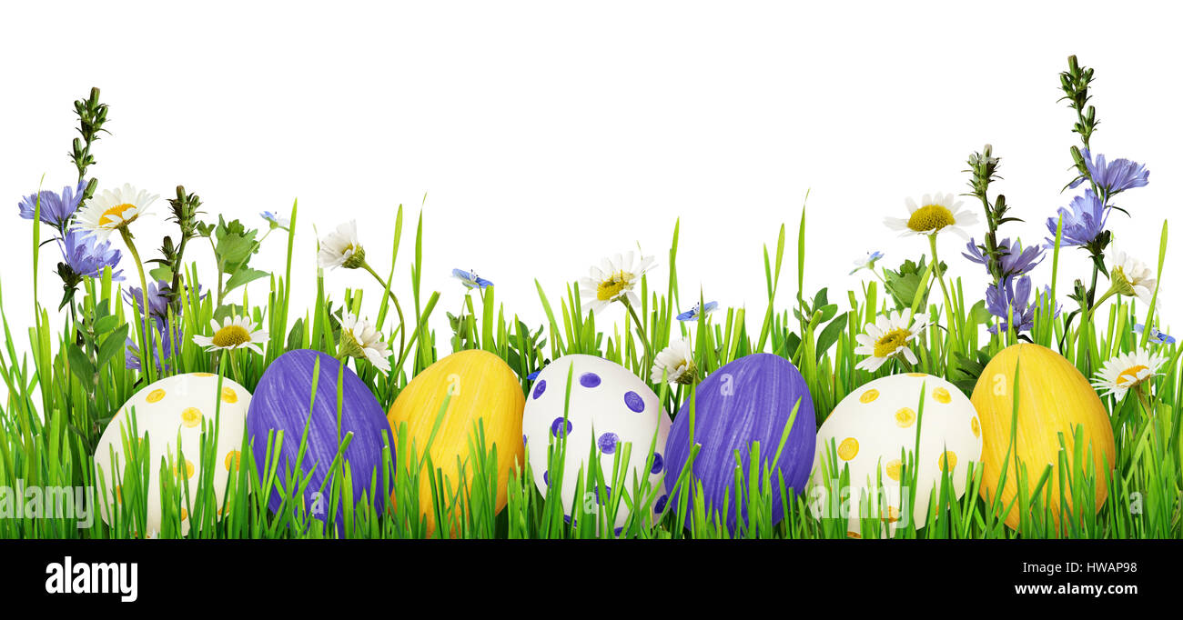 Easter Eggs Grass And Wild Flowers Border On White Background