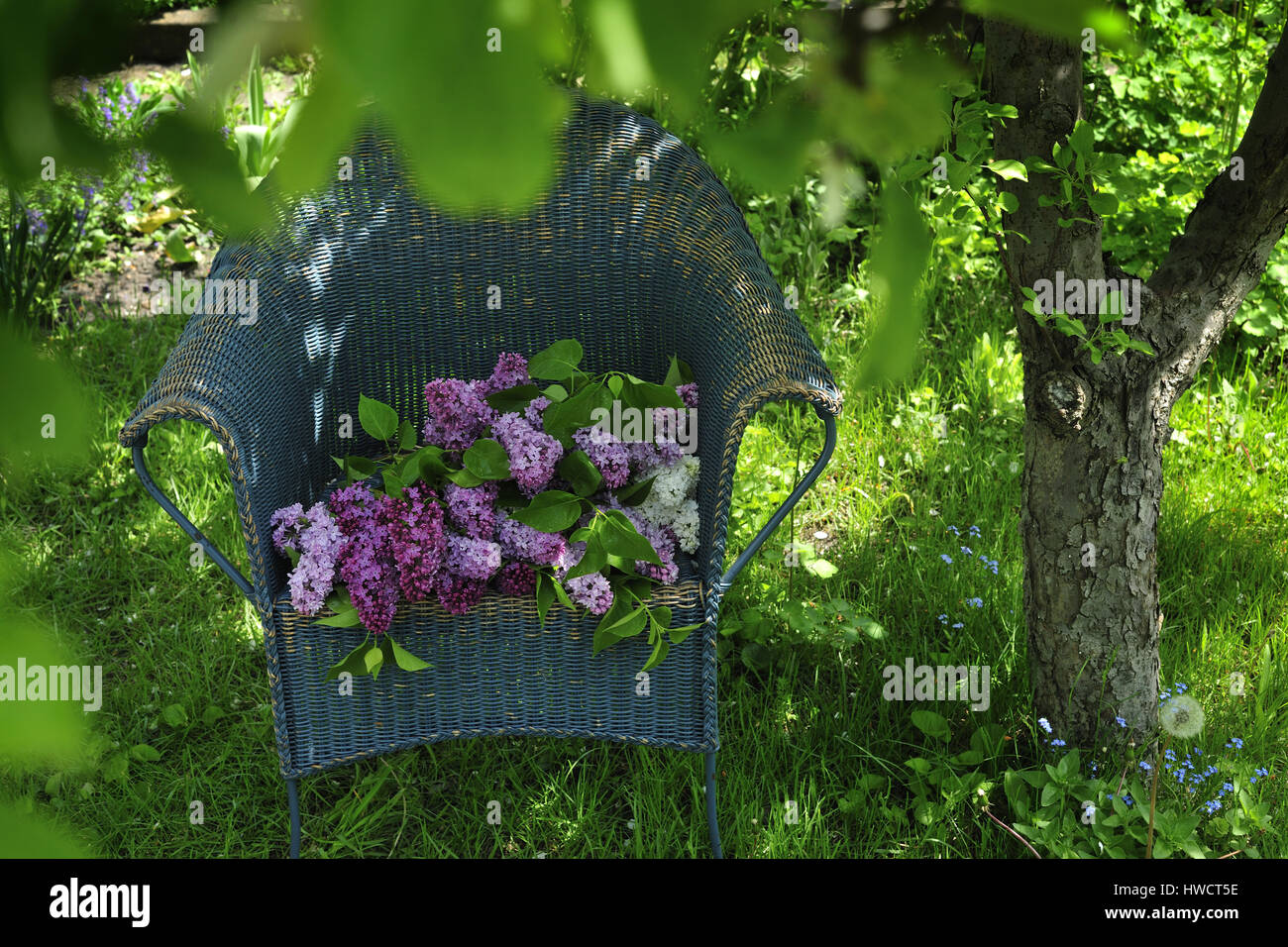 Shrubs with purple flowers at end of branch -  Branch Bucket Cut Cut Flower Harvest Lilac Mauve Outdoors