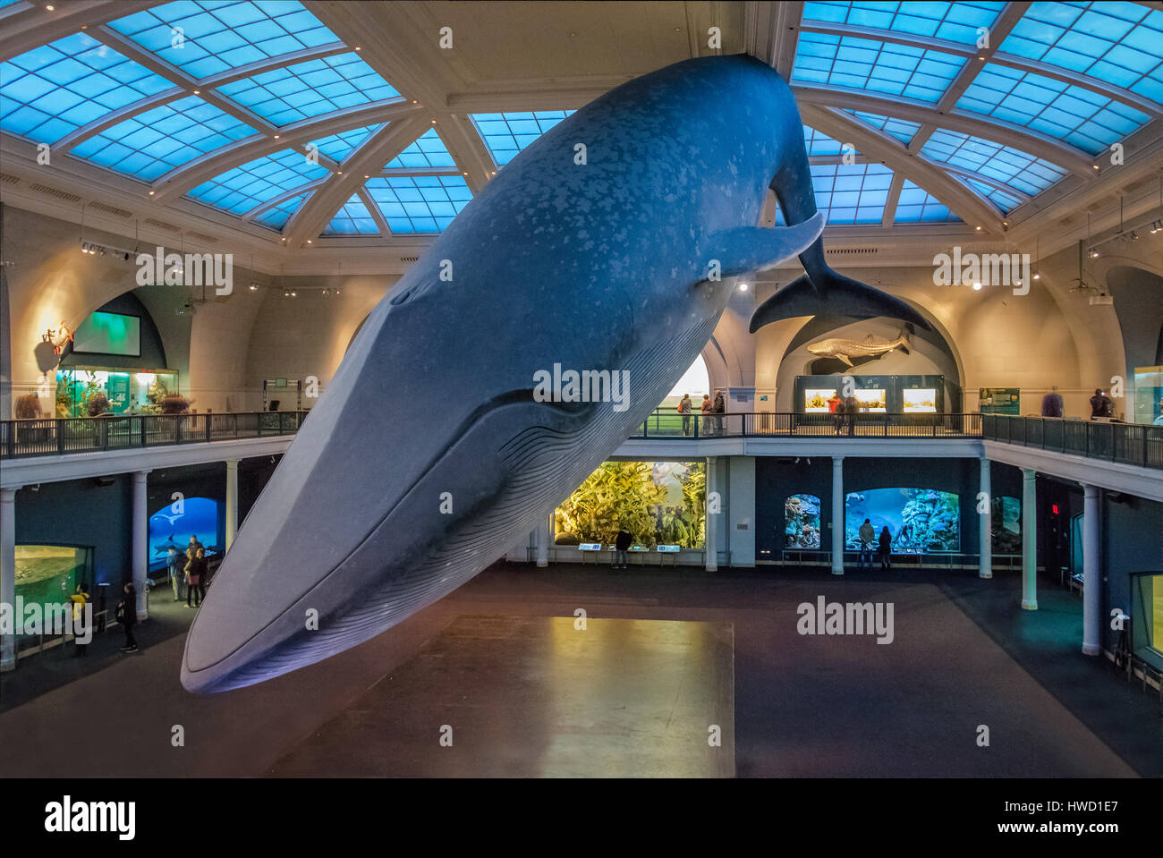 American Museum Of Natural History Whale Exhibit