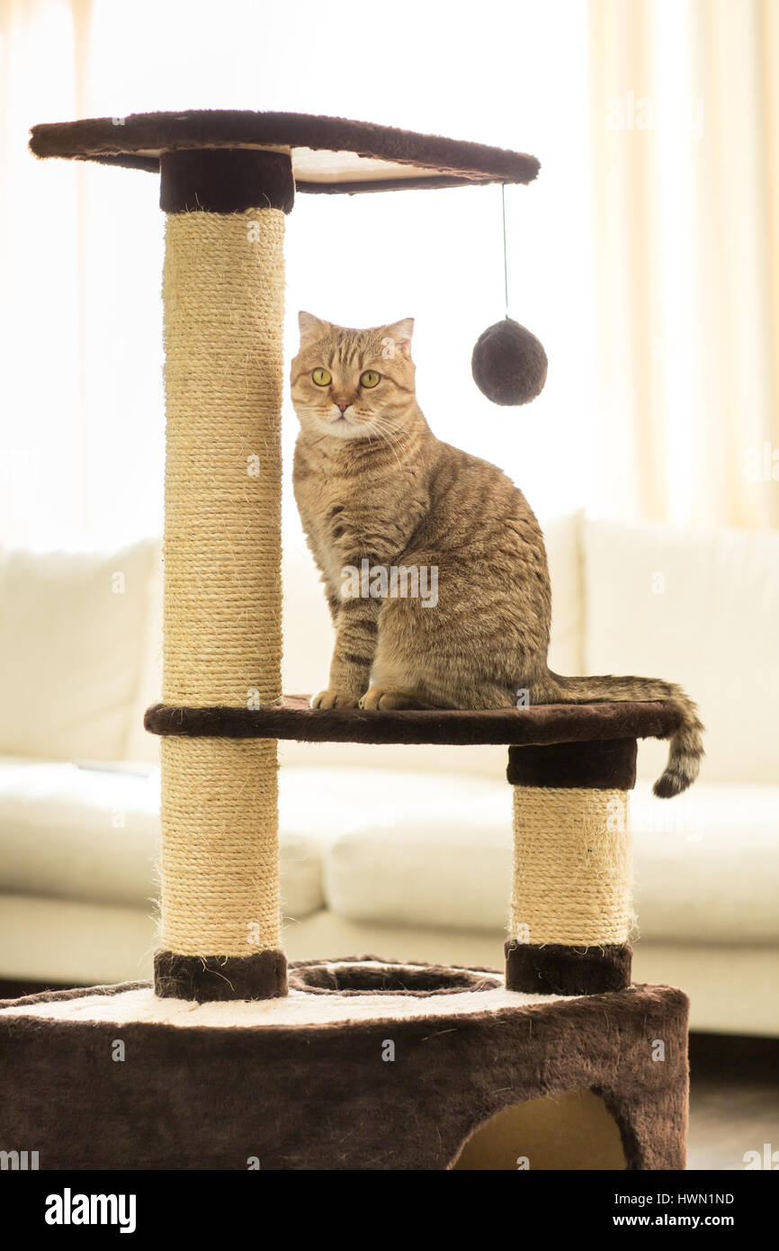 Cat Sitting On A Scratching Post Living Room Background